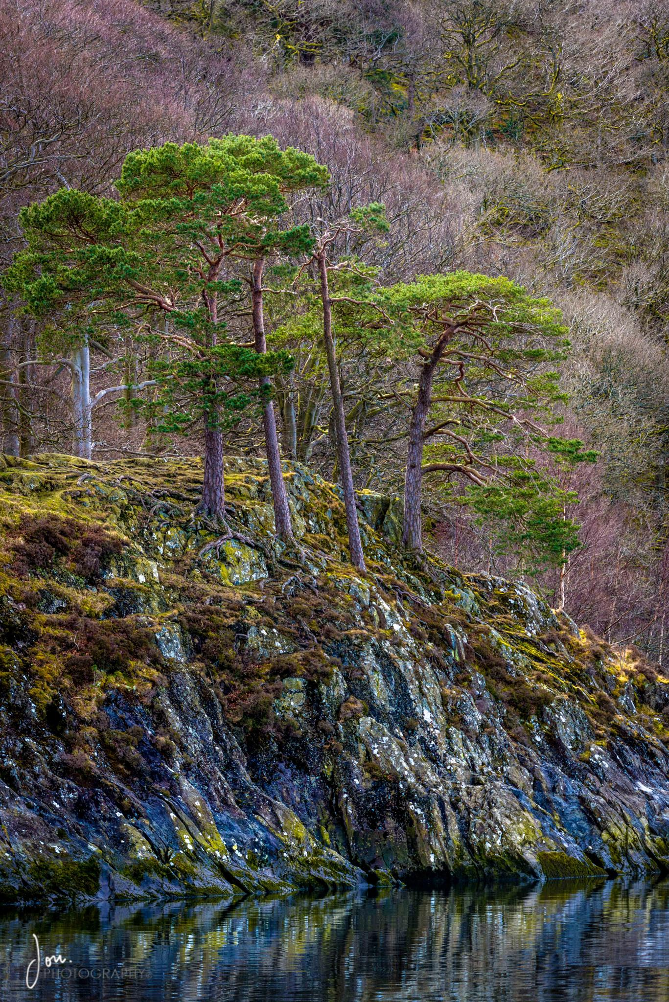 Firs over Ulleswater by Makalu