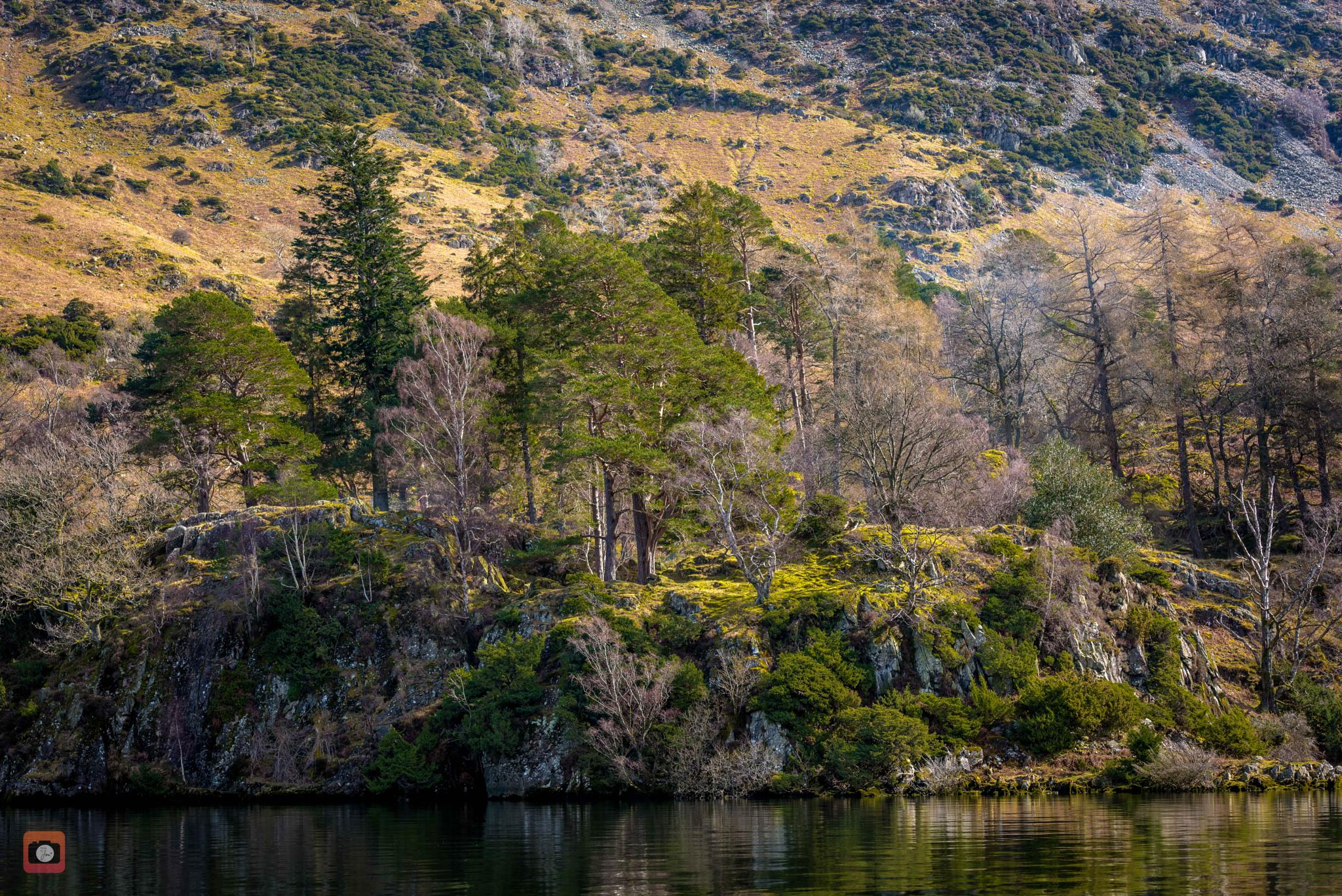 Firs over Ulleswater II by Makalu