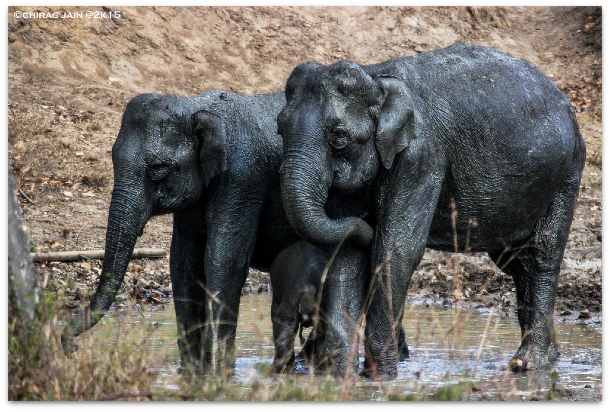 muddy  sisters by chiragjain009