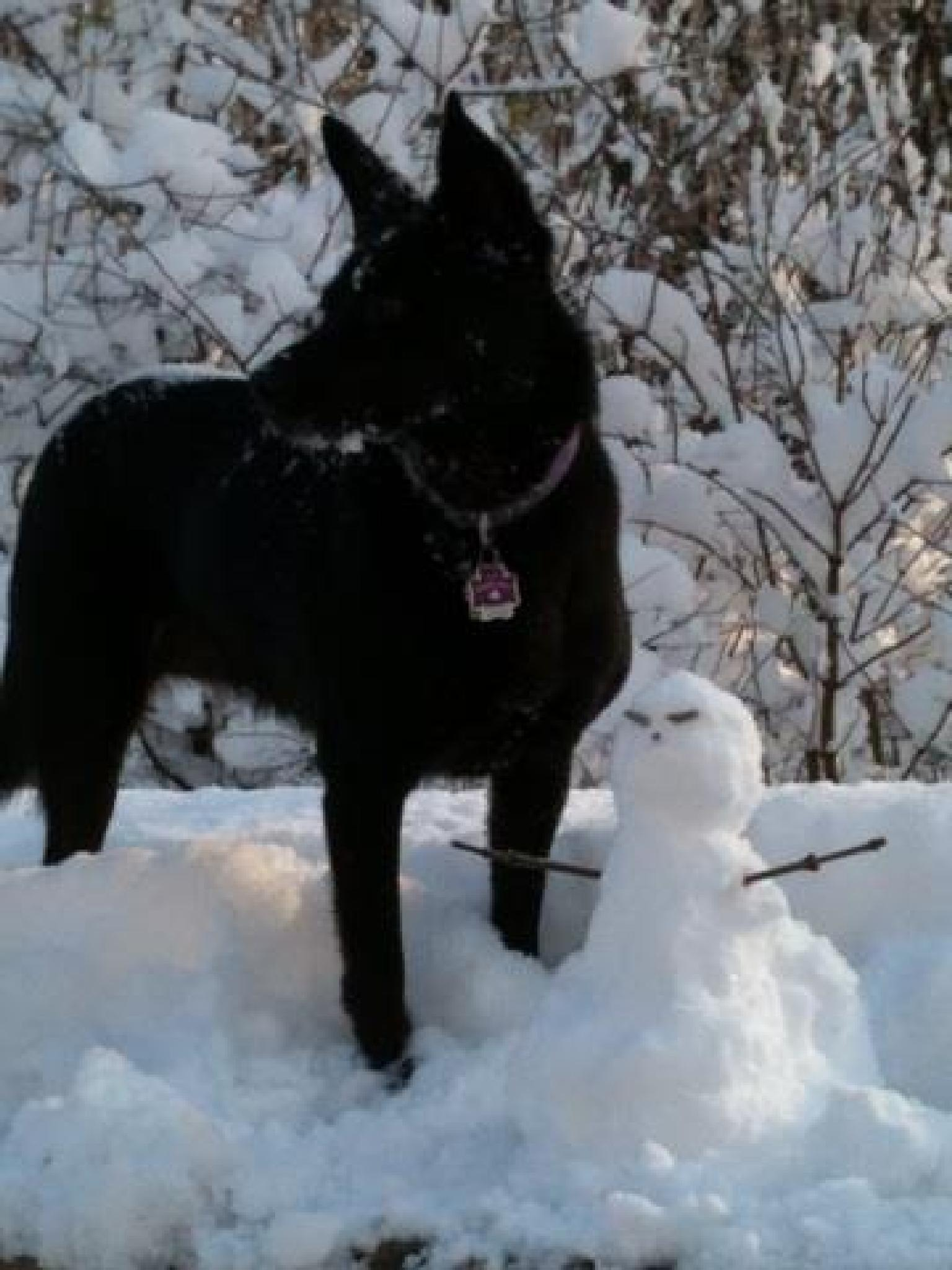 Dog & Snowman by deb.mclauchlin