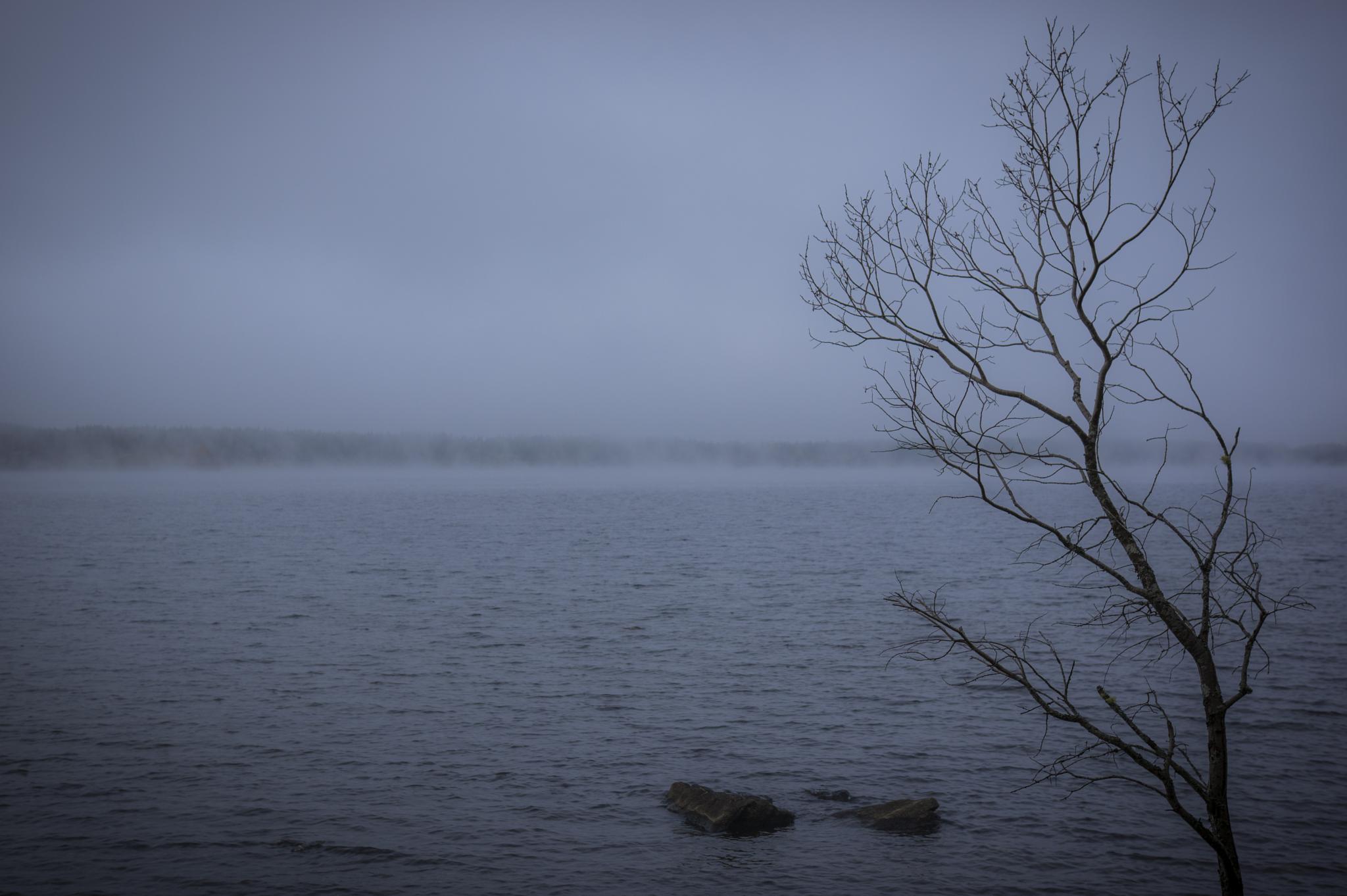 Misty lake by gorber
