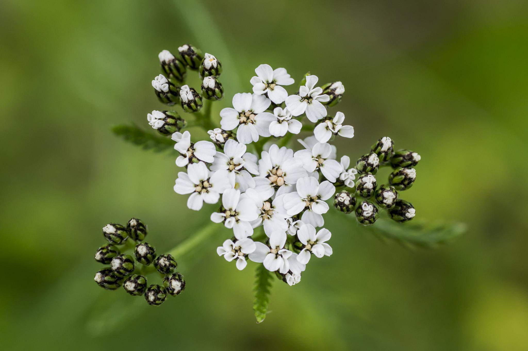 flower by gorber