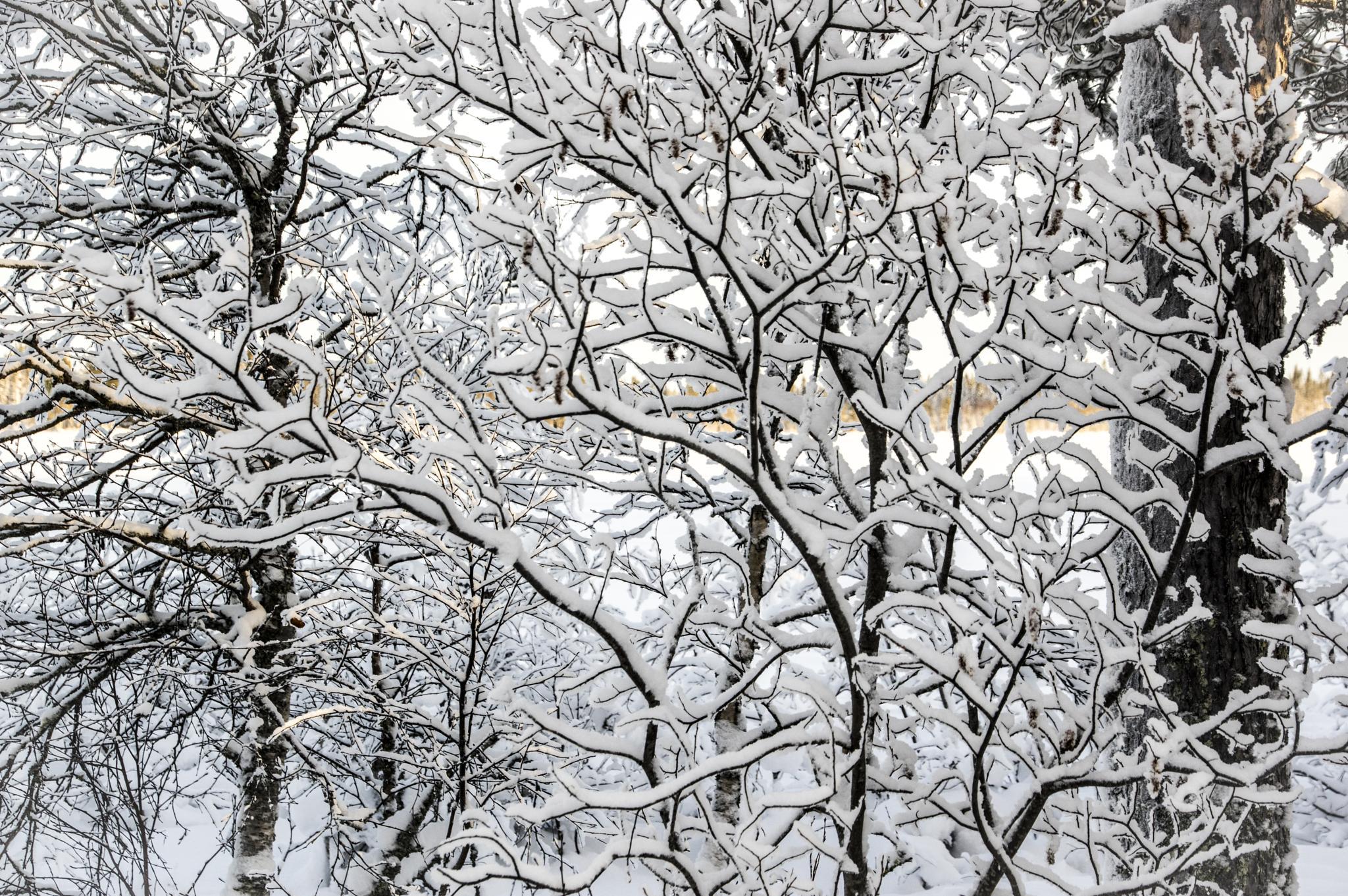 soft snow by gorber