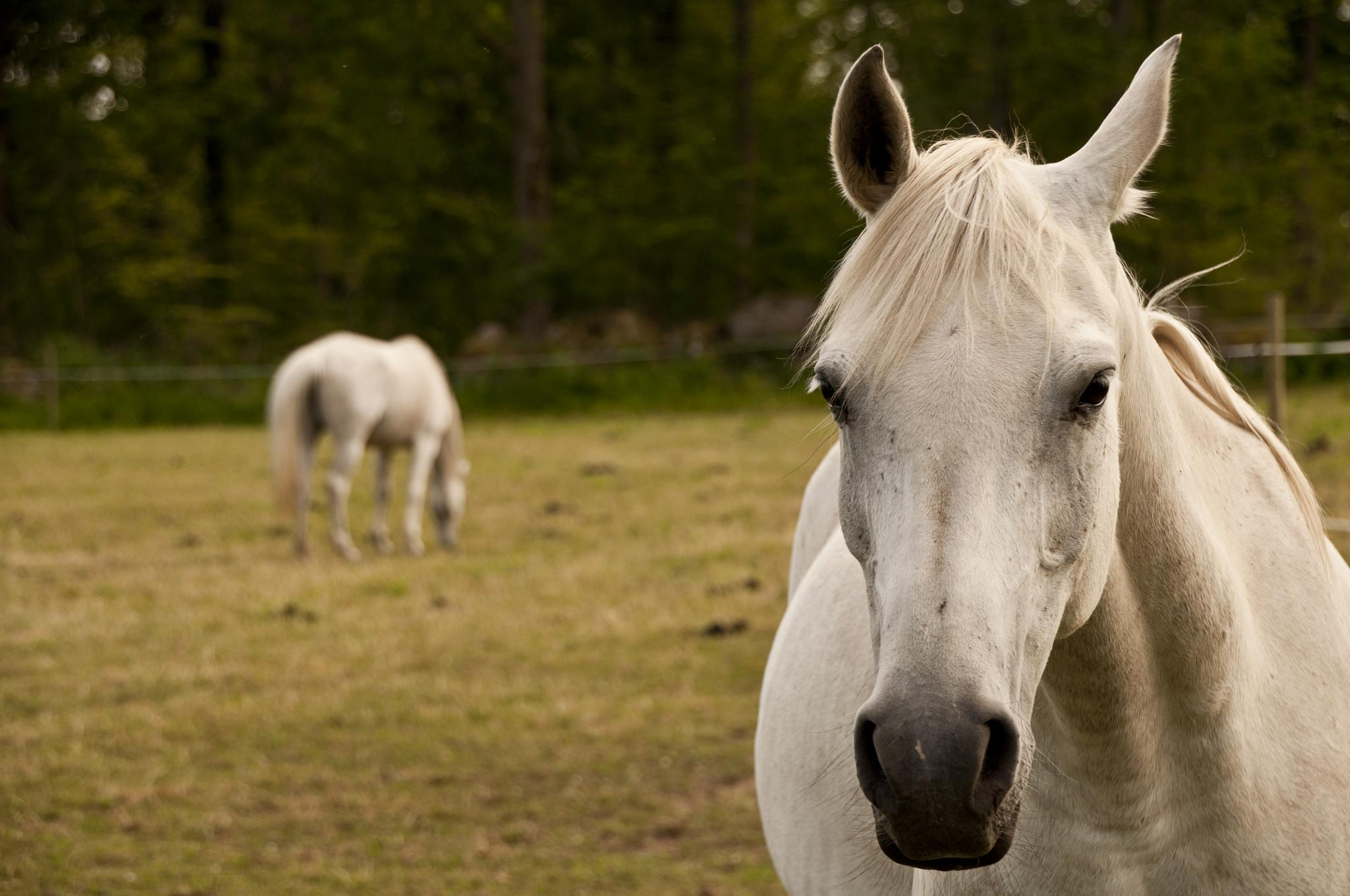 horse by gorber