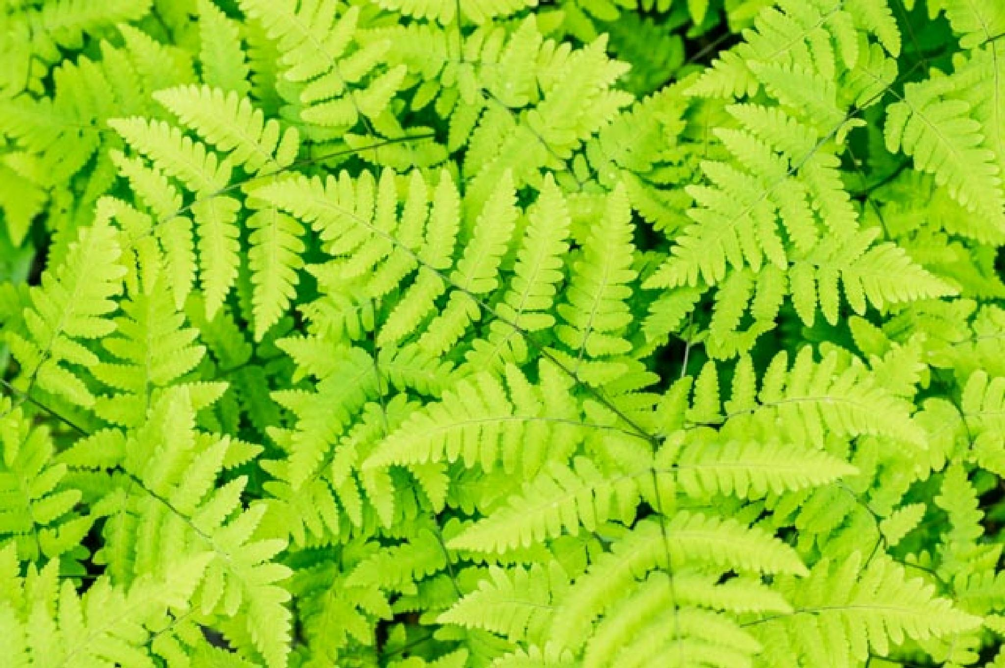 green leafs by gorber