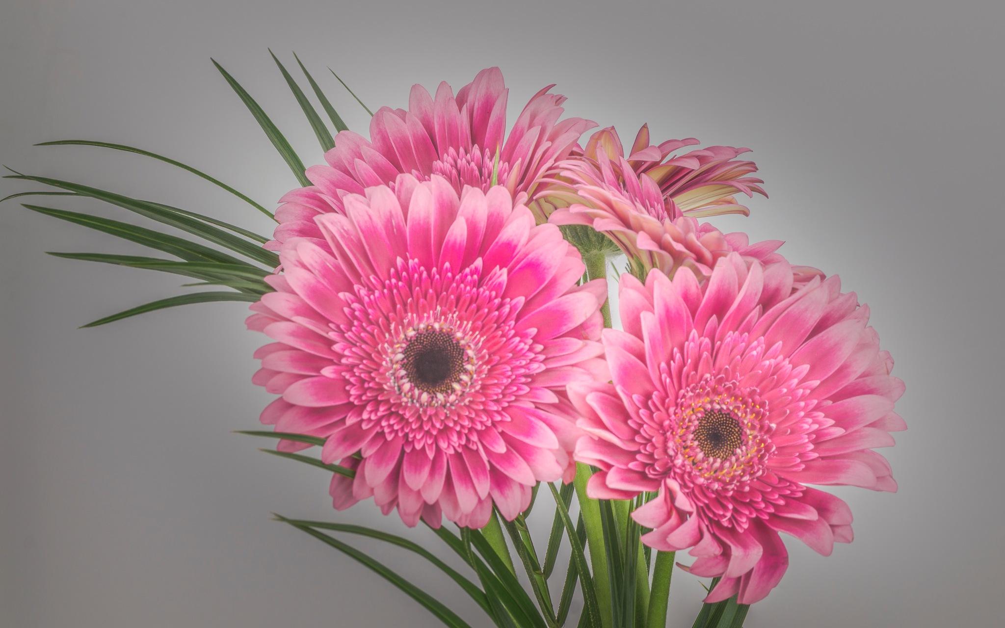 flowers by TonBoelaars