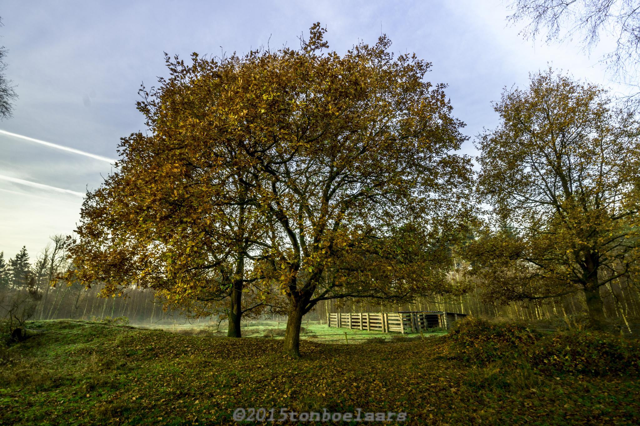herfst by TonBoelaars