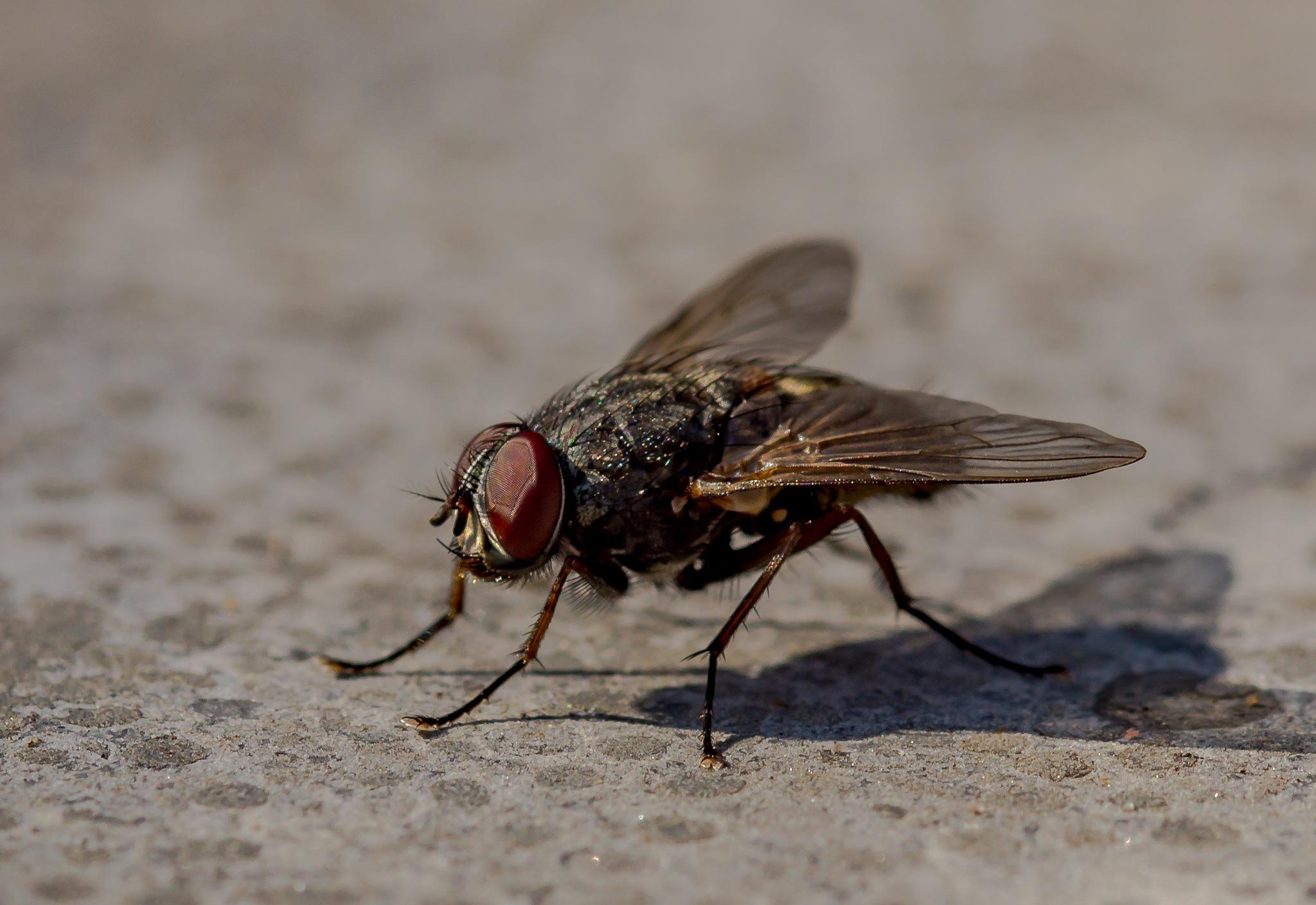 fly by TonBoelaars