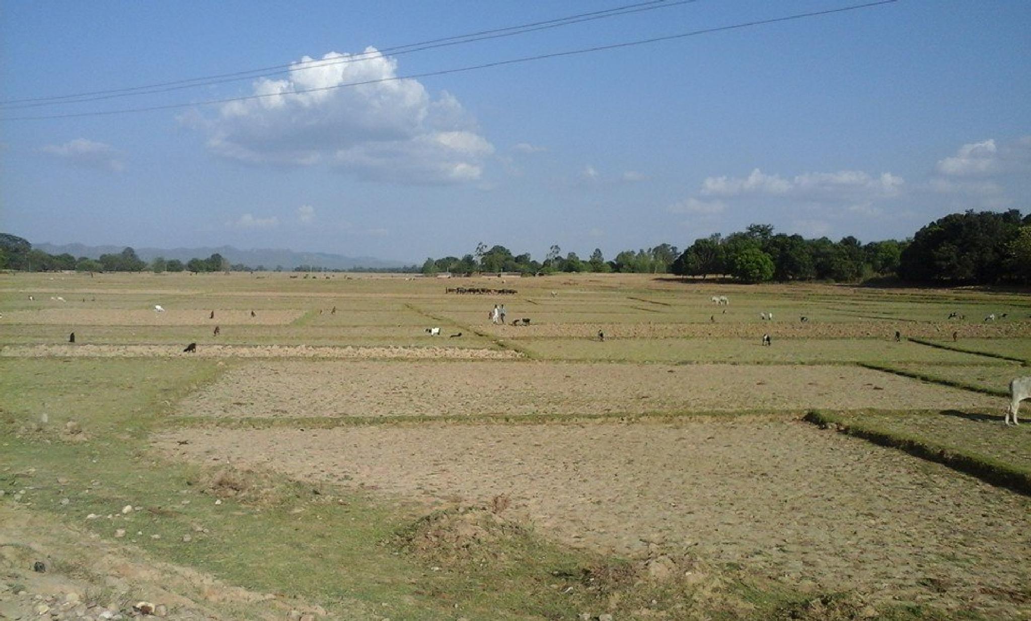 Fertilization Field in Nepal . by som.gurung.961