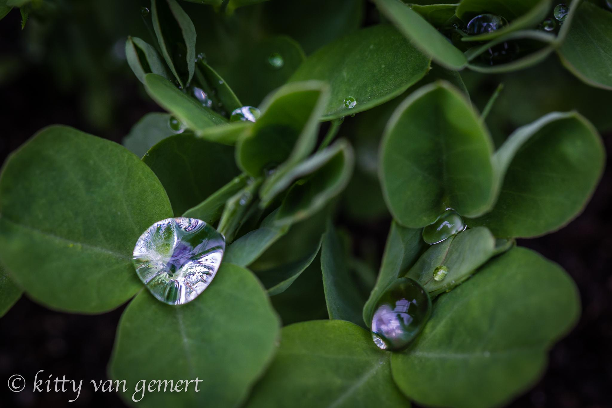 Water droplets in the morning reflecting by kitty van gemert