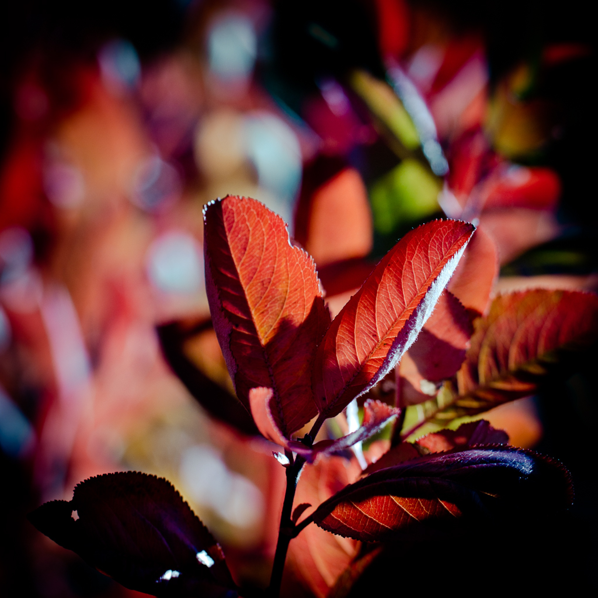 Autumn II by KristinaSA