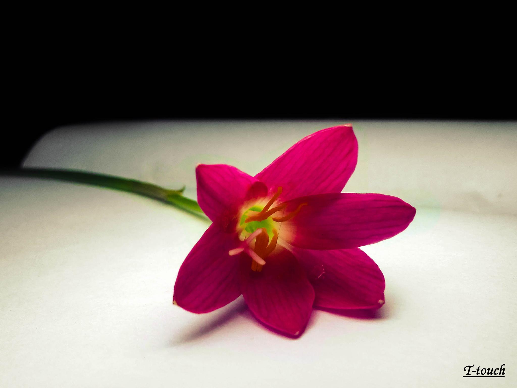 Grass Flower by TamalAryean