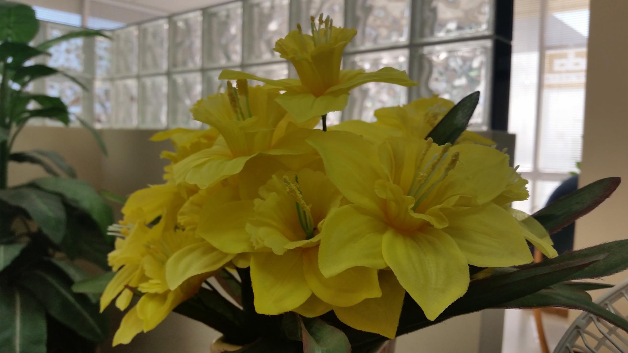Not so Mellow Yellow by WickedVegas
