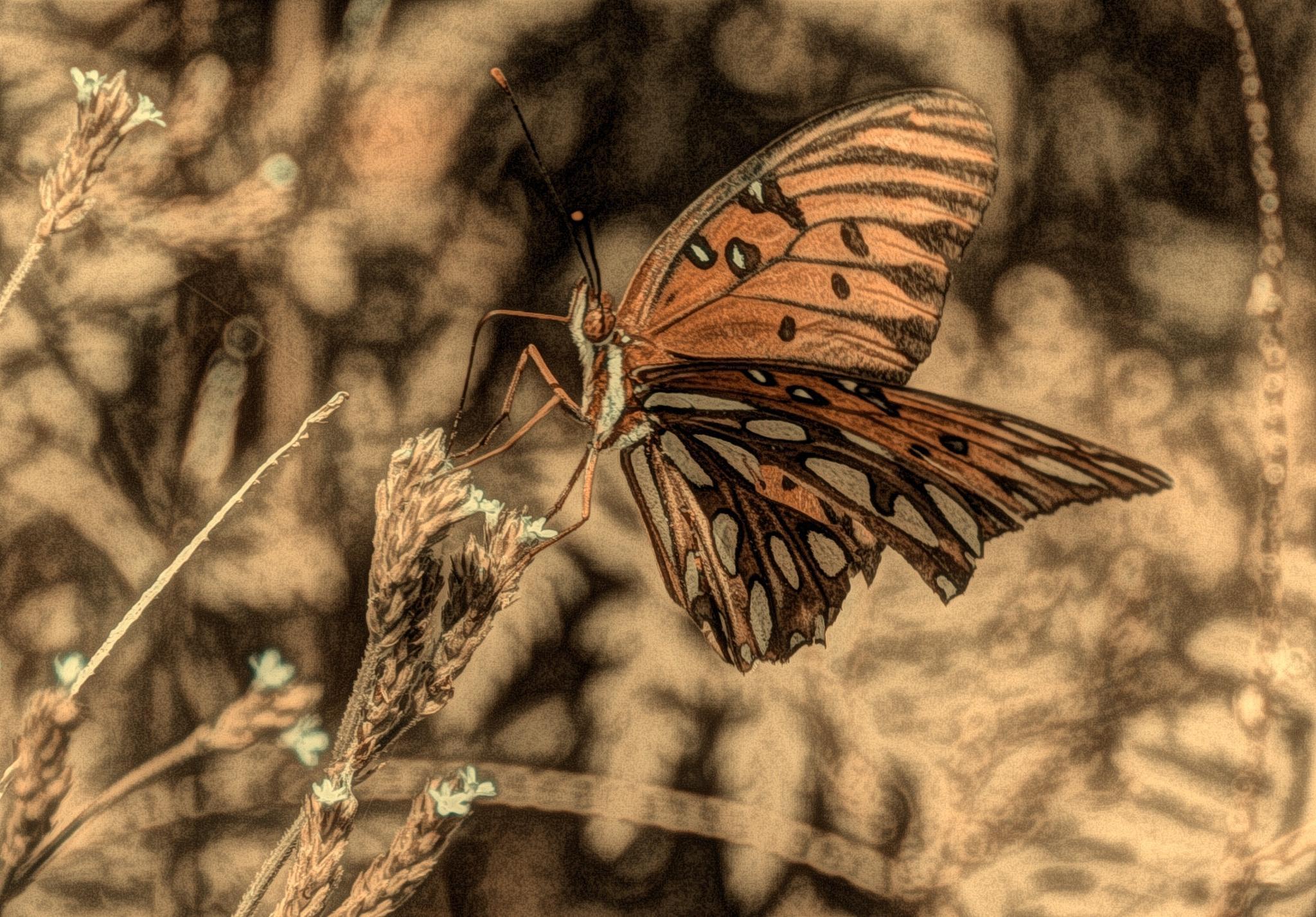 Florida butterfly by bette.hileman