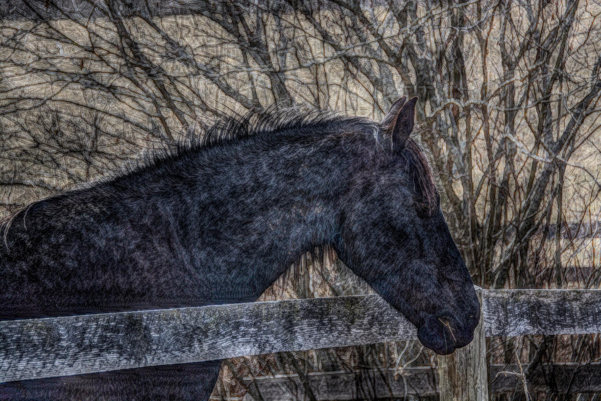 Horse near fence by bette.hileman