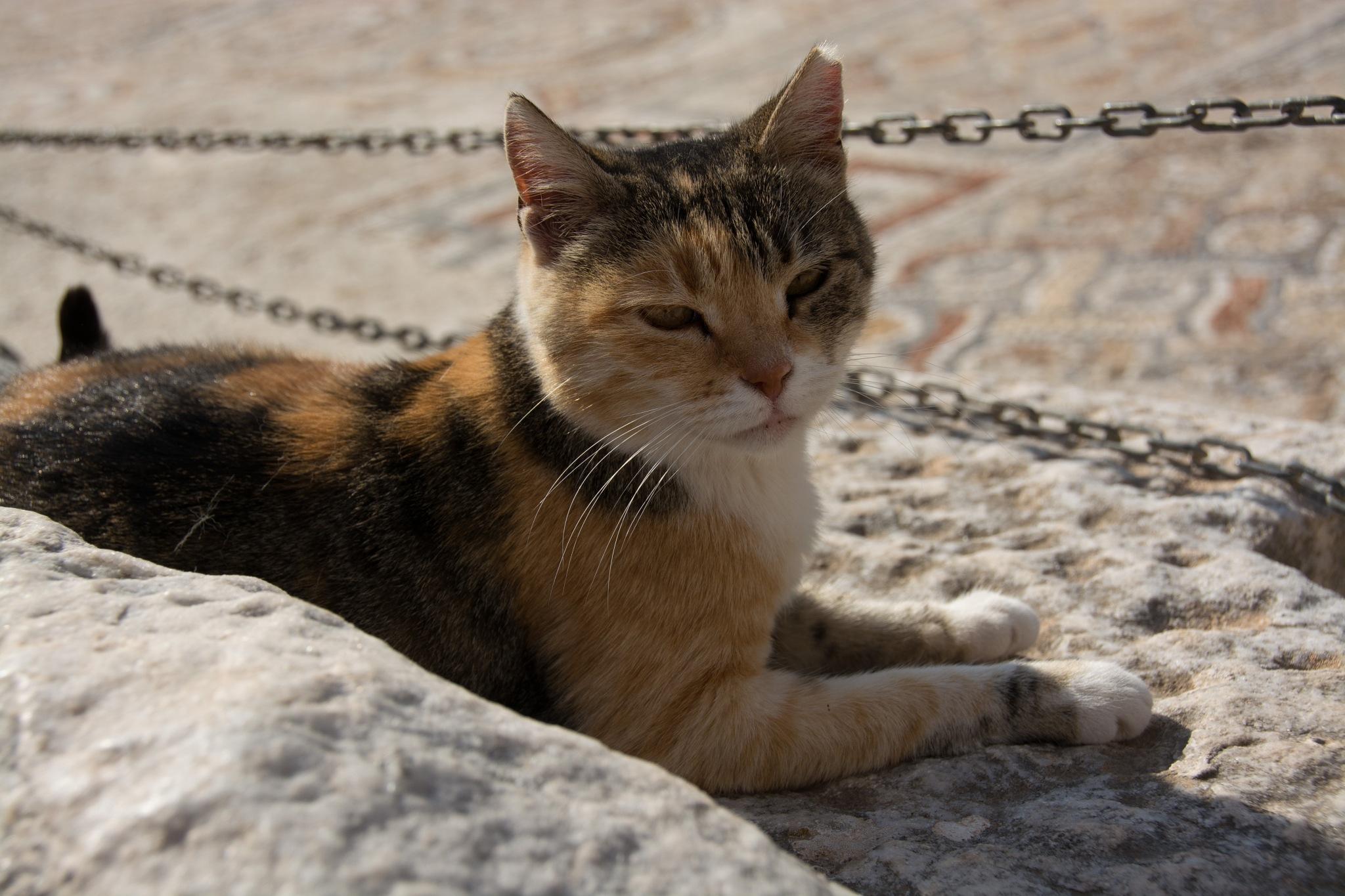 Cat Guarding Ancient Ephesus by bette.hileman