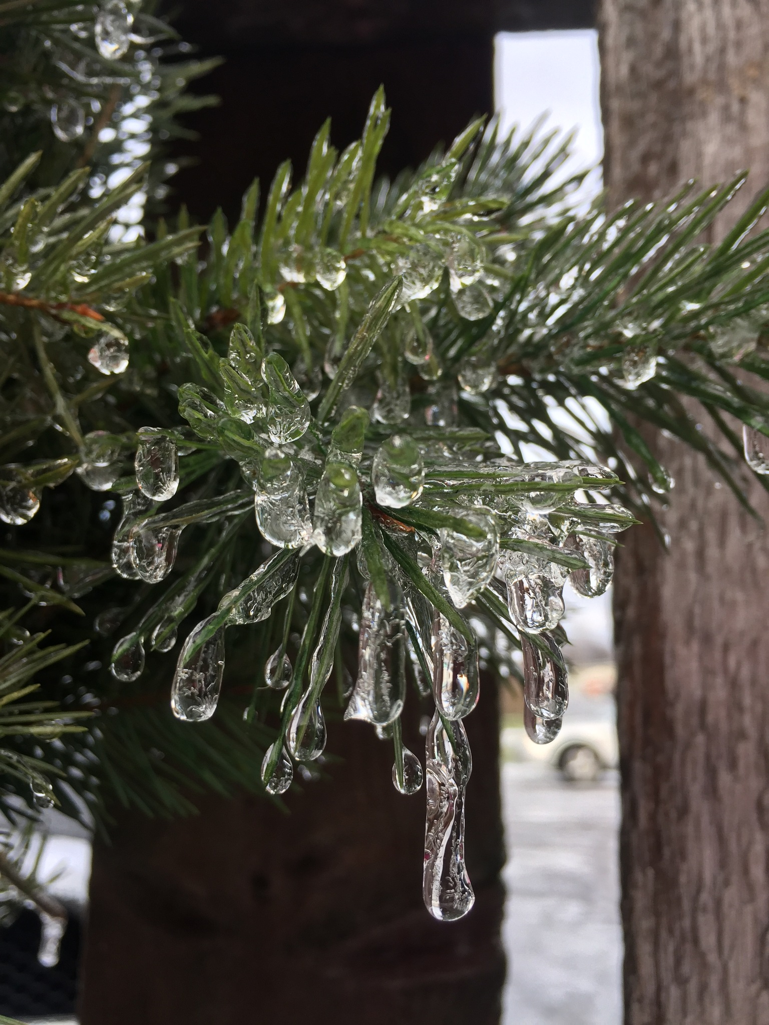 Winter wreath with ice by Marilyn S. Martin
