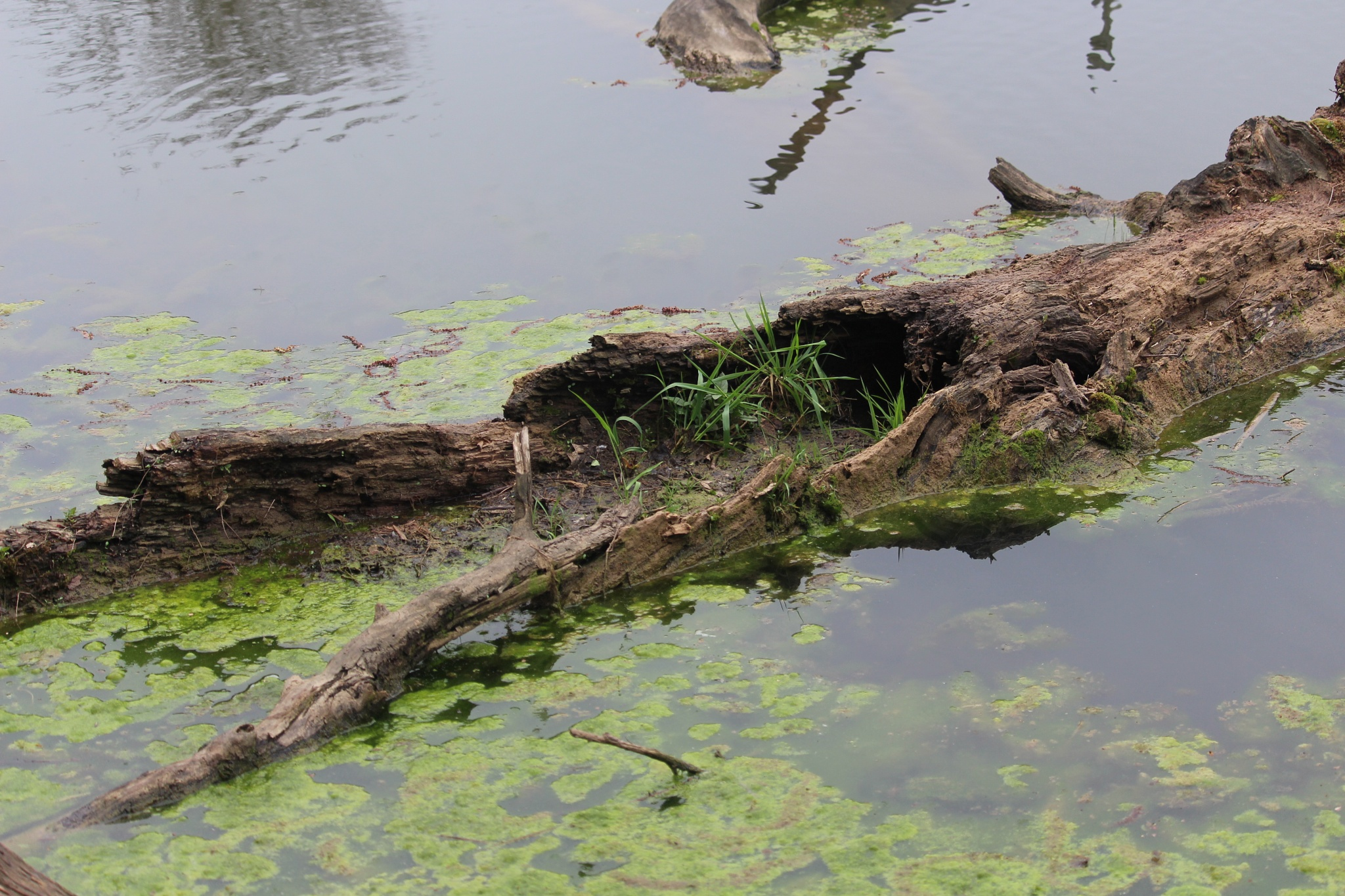 log in pond by Marilyn S. Martin