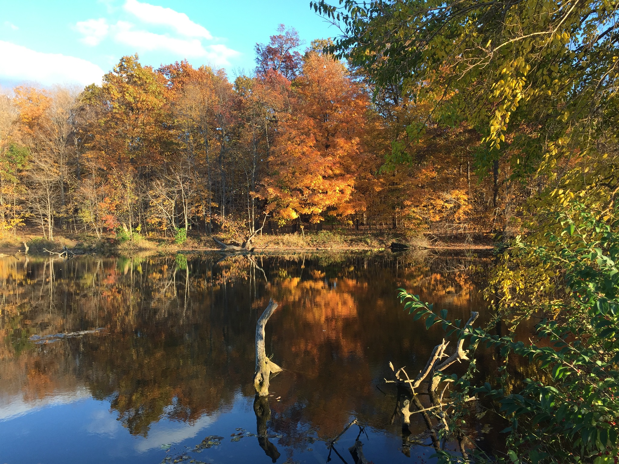 Fall Colors by Marilyn S. Martin