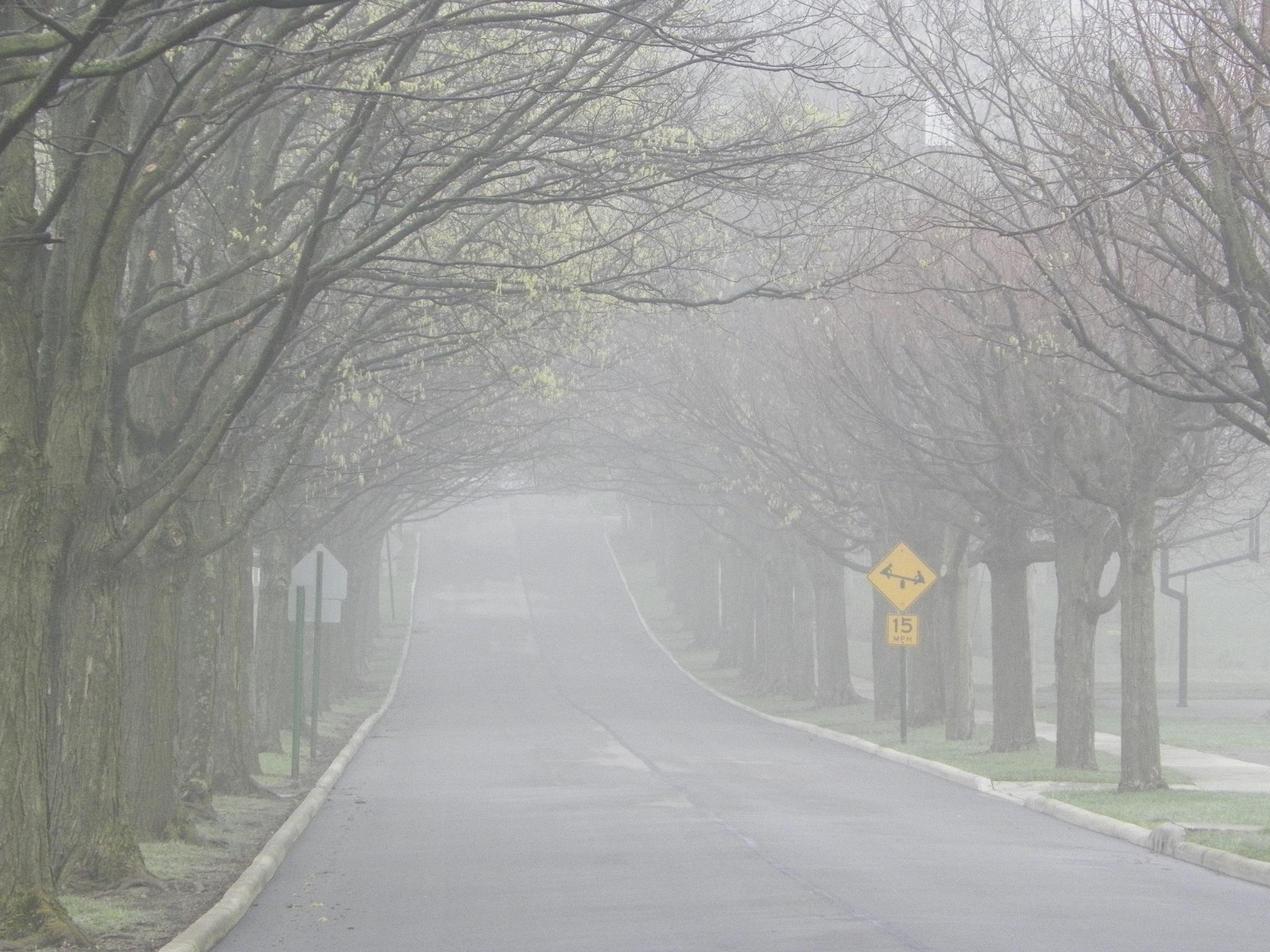 Fog by Marilyn S. Martin