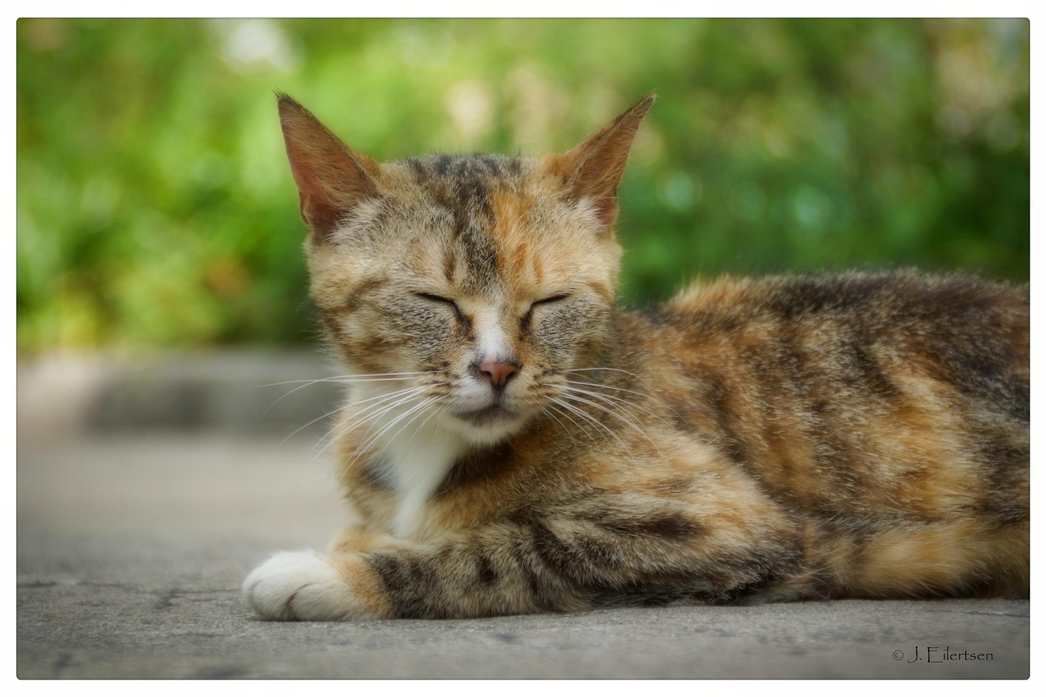 Tired cat by joeilert