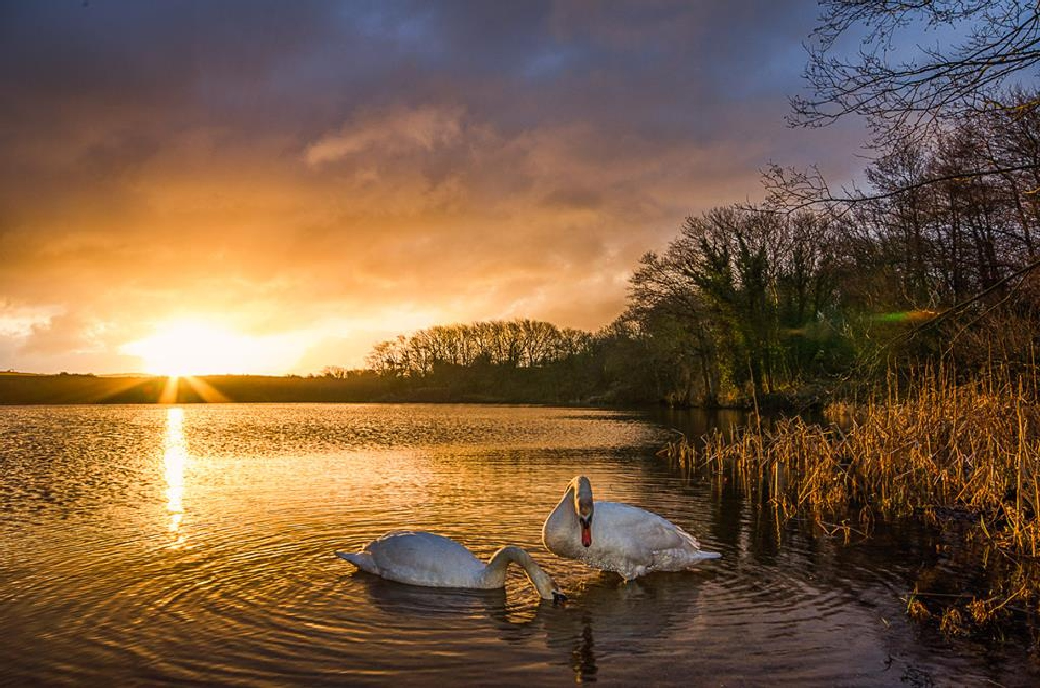 swan lake by stephen.roberts.31586
