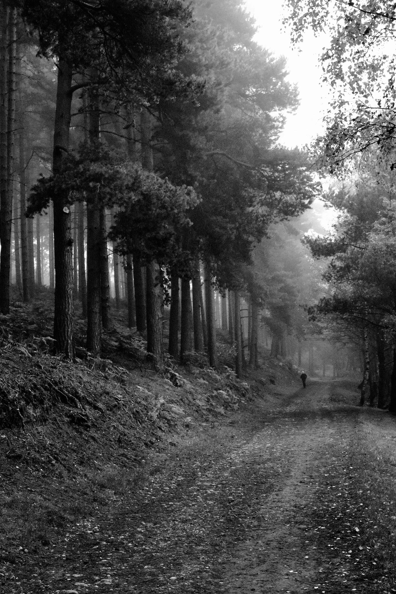 a wooland walk by stephen.roberts.31586