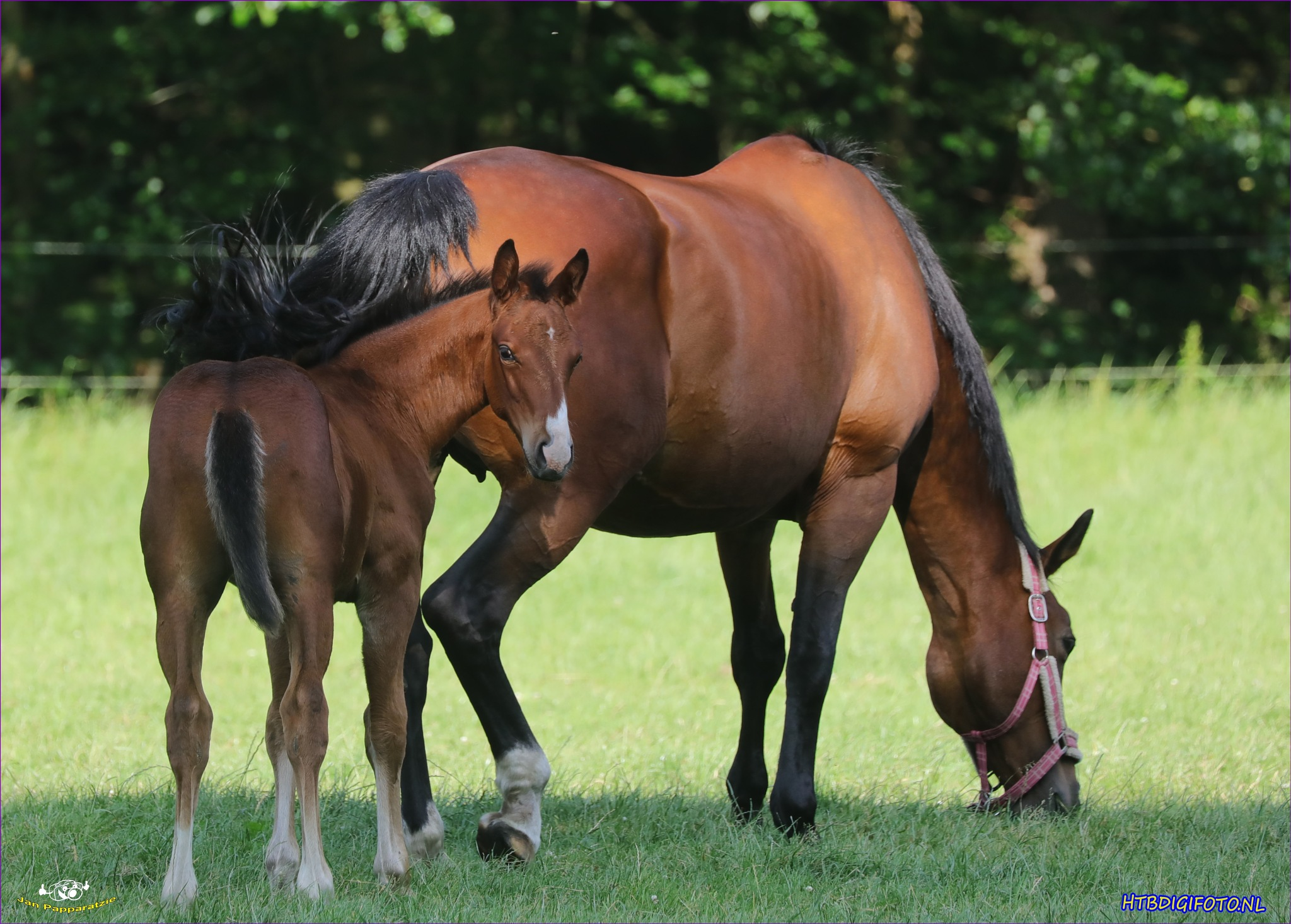 Horse with foal by janpapparatzie