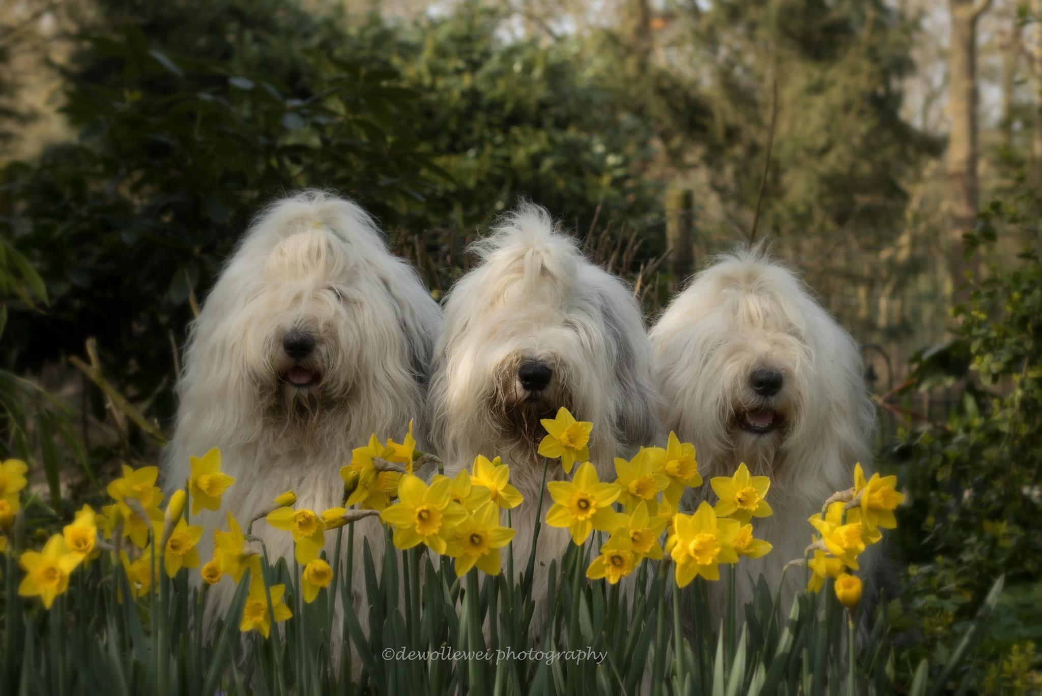 Spring is in the air... by dewollewei