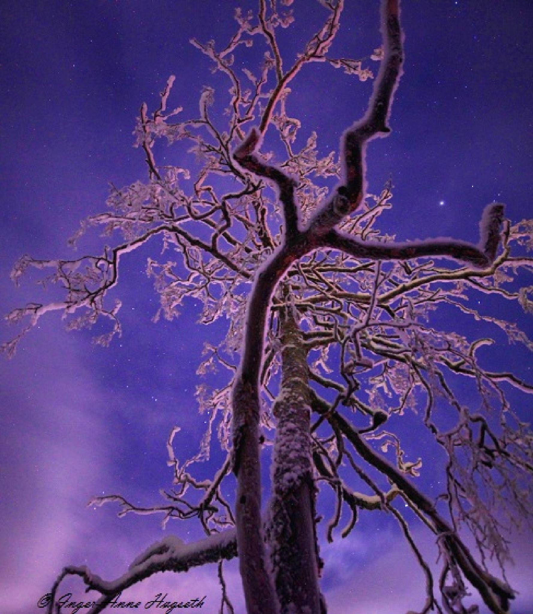 A cold night by IngerAnneHogseth