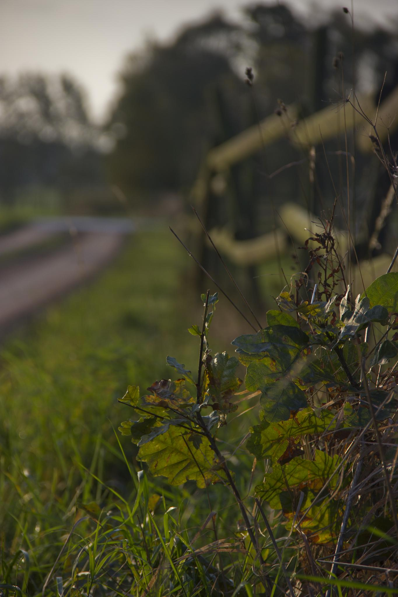 Countryside by mikael.nerberg