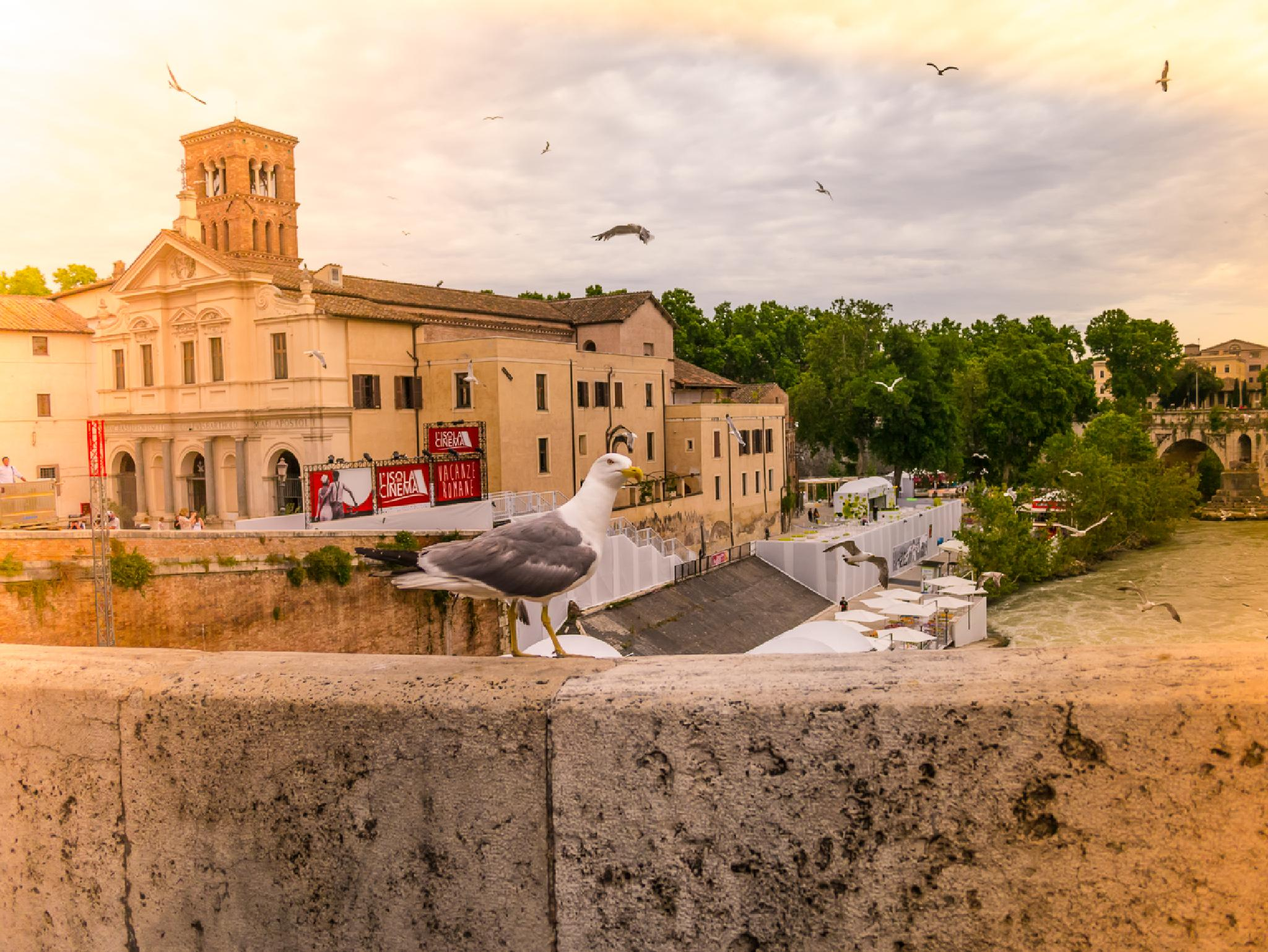 the bird and the curch by Maurizio Fissi