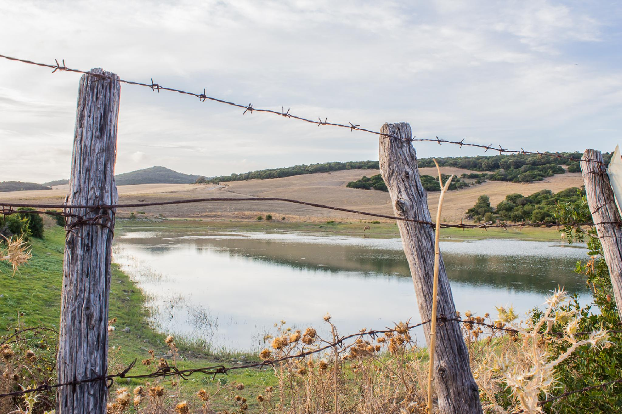 fenced out by Maurizio Fissi