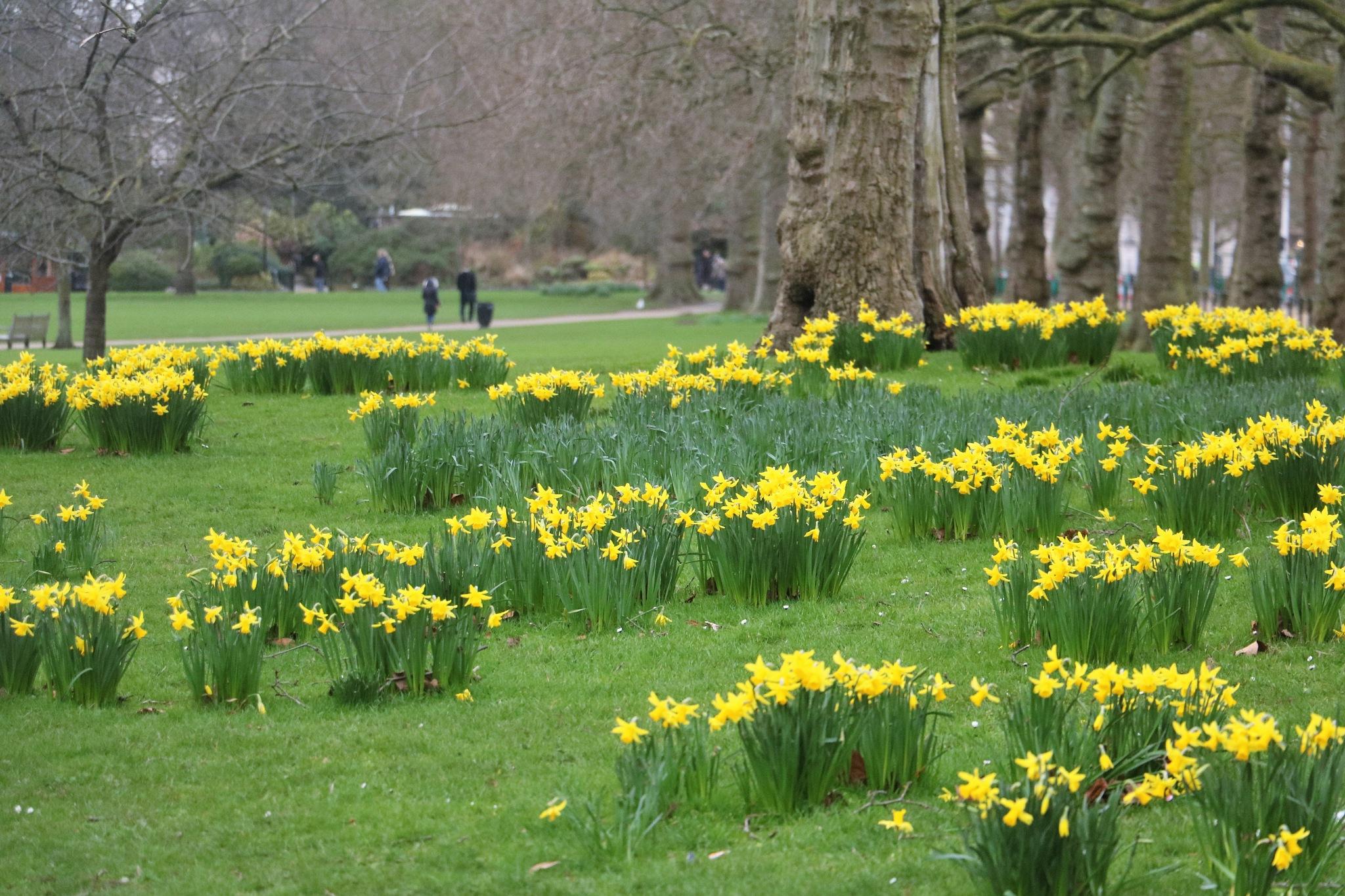 Springtime at St. James by ken.pearce.9406