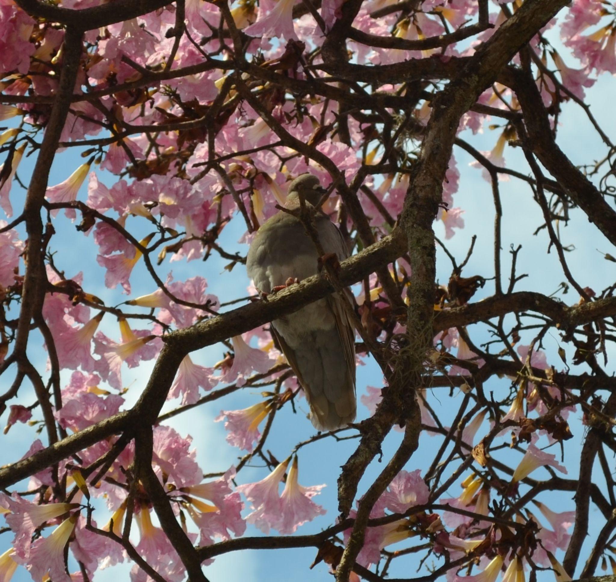 BIRD by yakolaverde