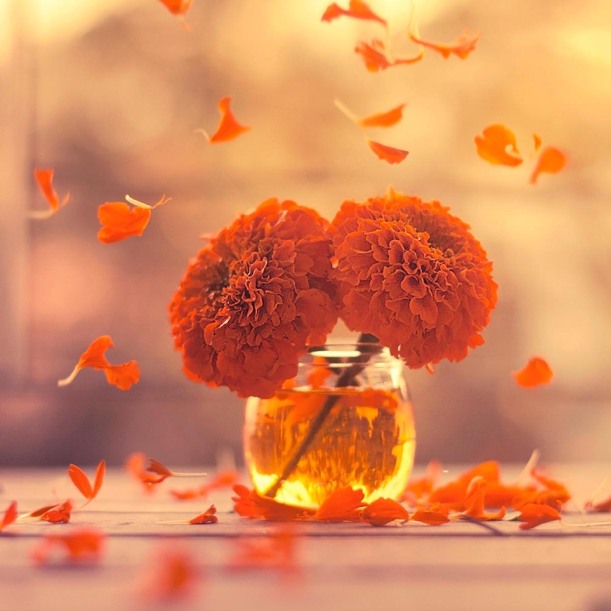 Marigold days by Ashraful Arefin