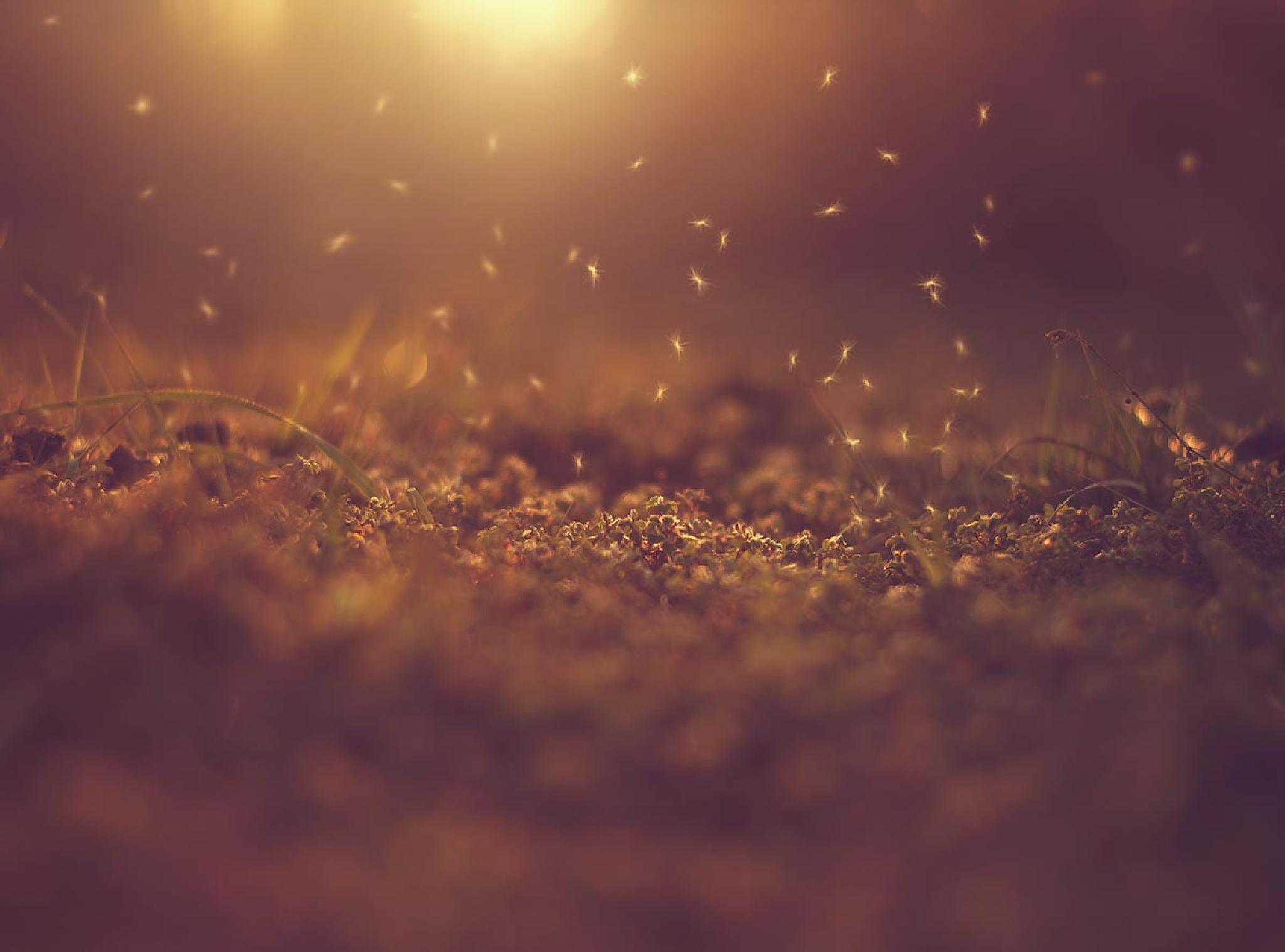 Little fairies  by Ashraful Arefin