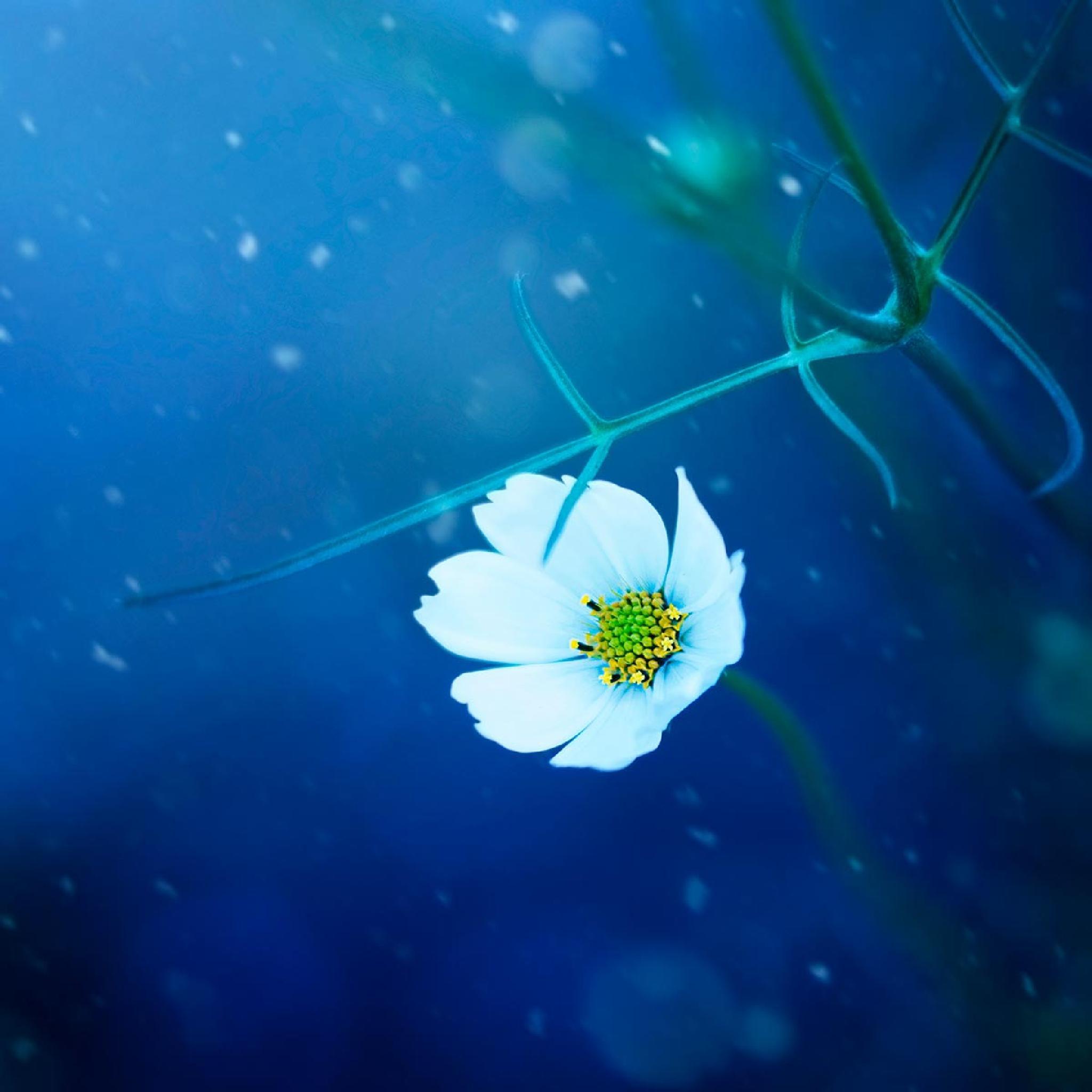 Snow queen by Ashraful Arefin