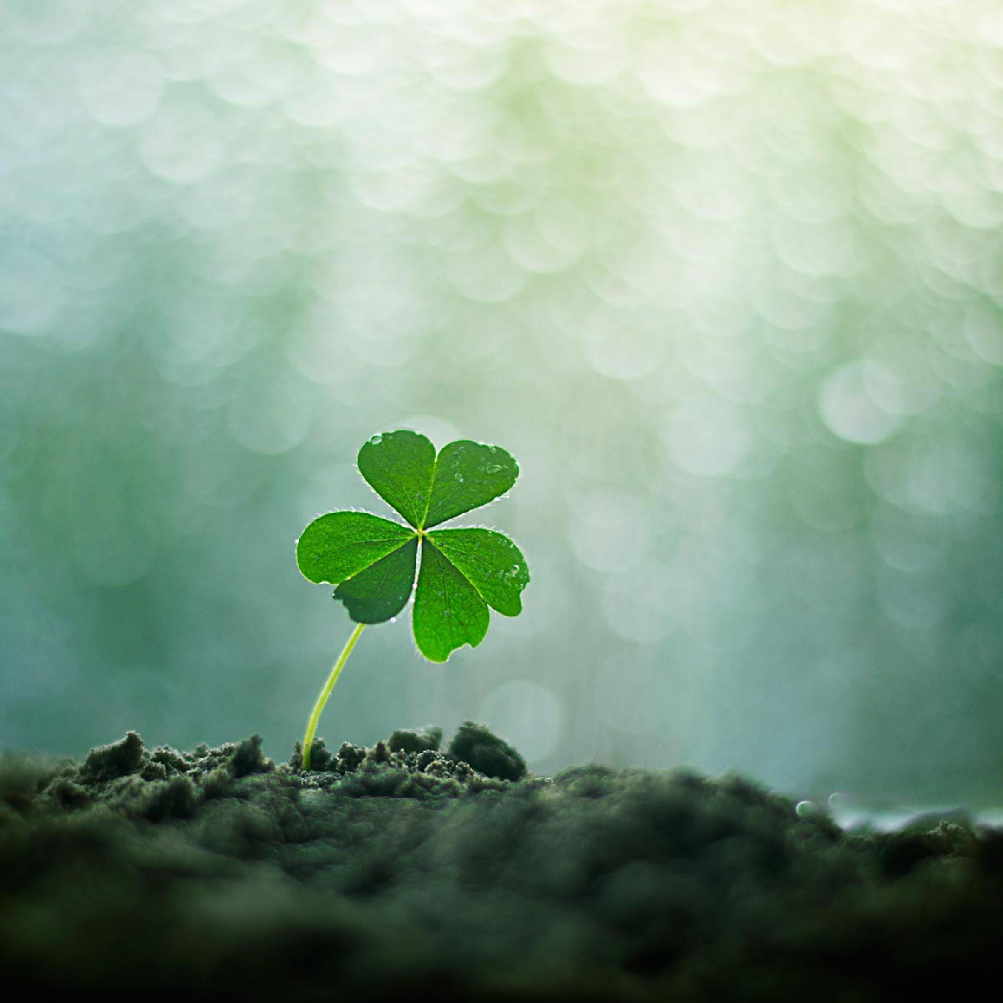 luck will grow by Ashraful Arefin