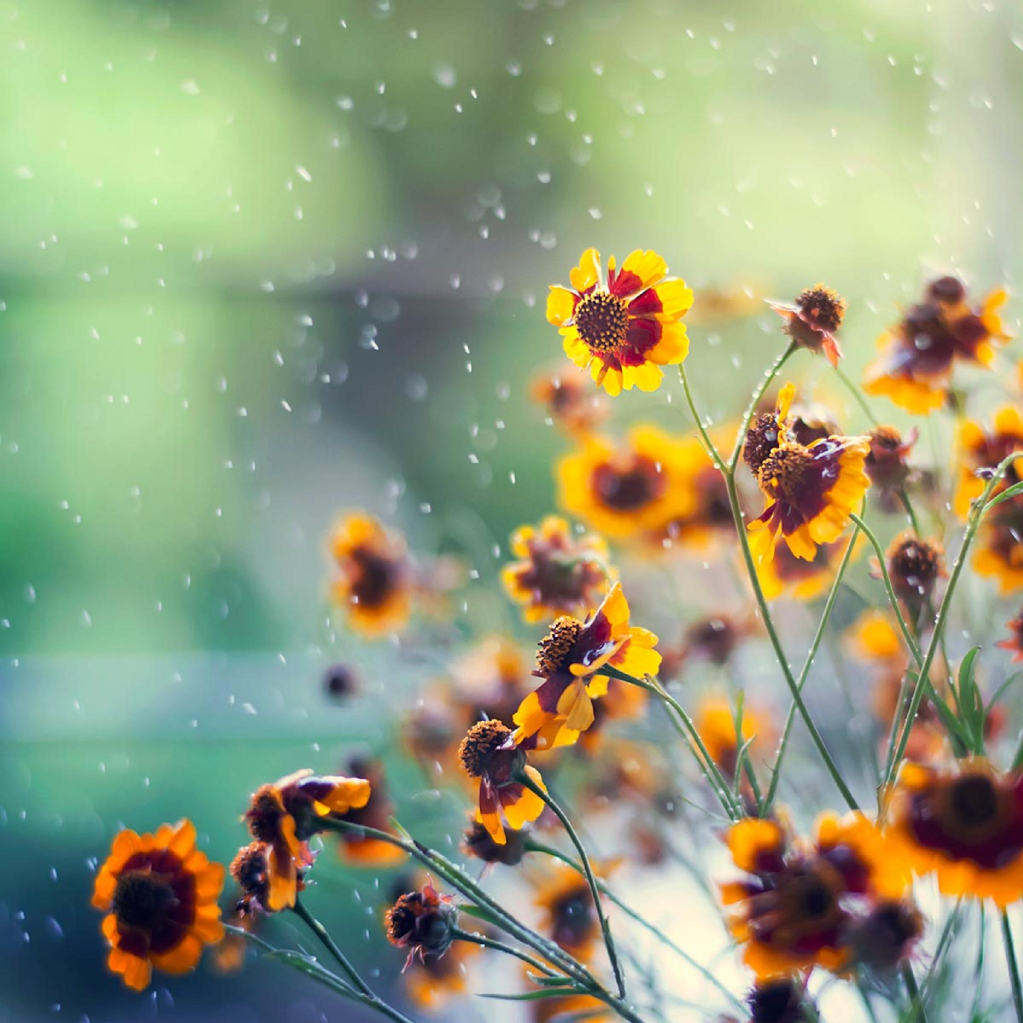 It's a beautiful day by Ashraful Arefin