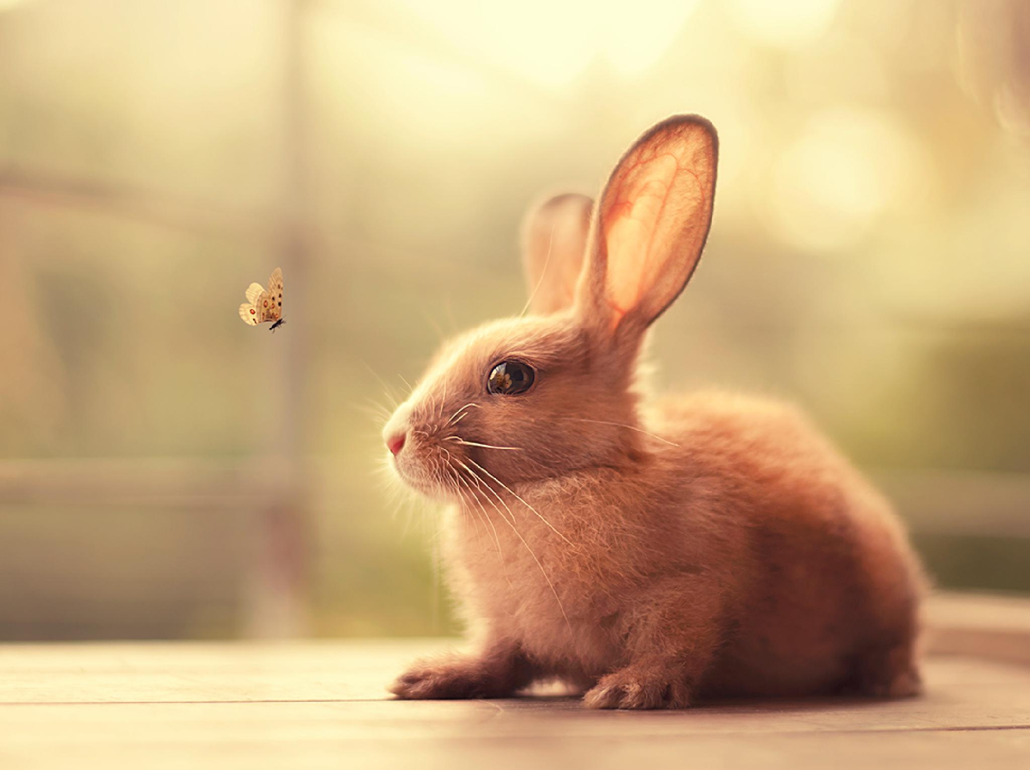 Hello There! by Ashraful Arefin