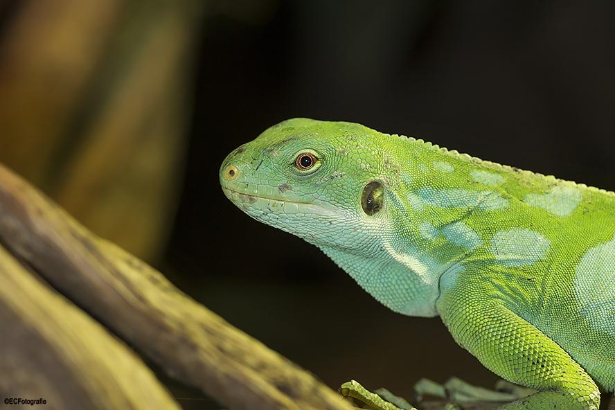 Beautiful green by eelke.cooiman