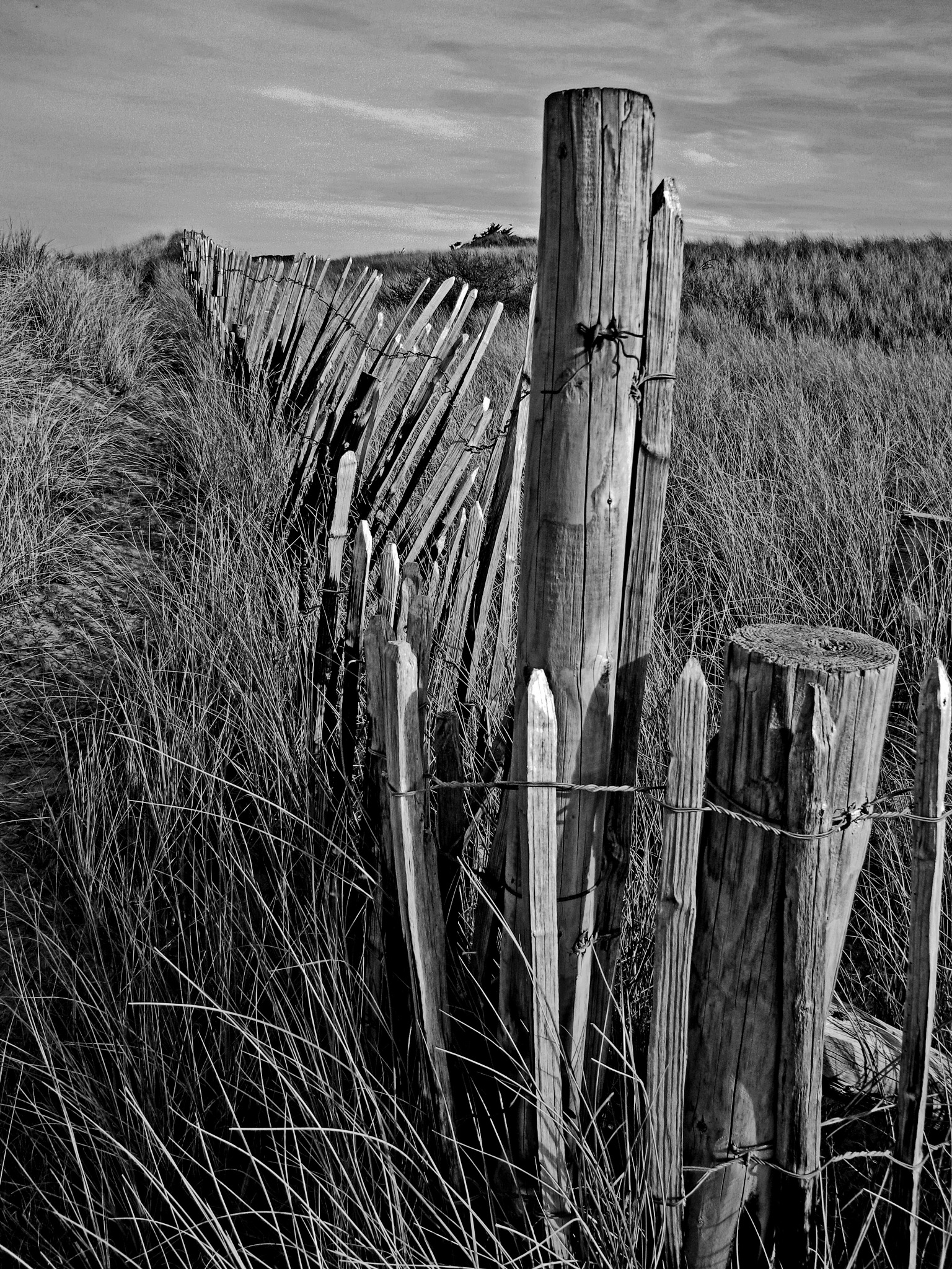 Photo in Black and White #picket fence #monochrome #black and white