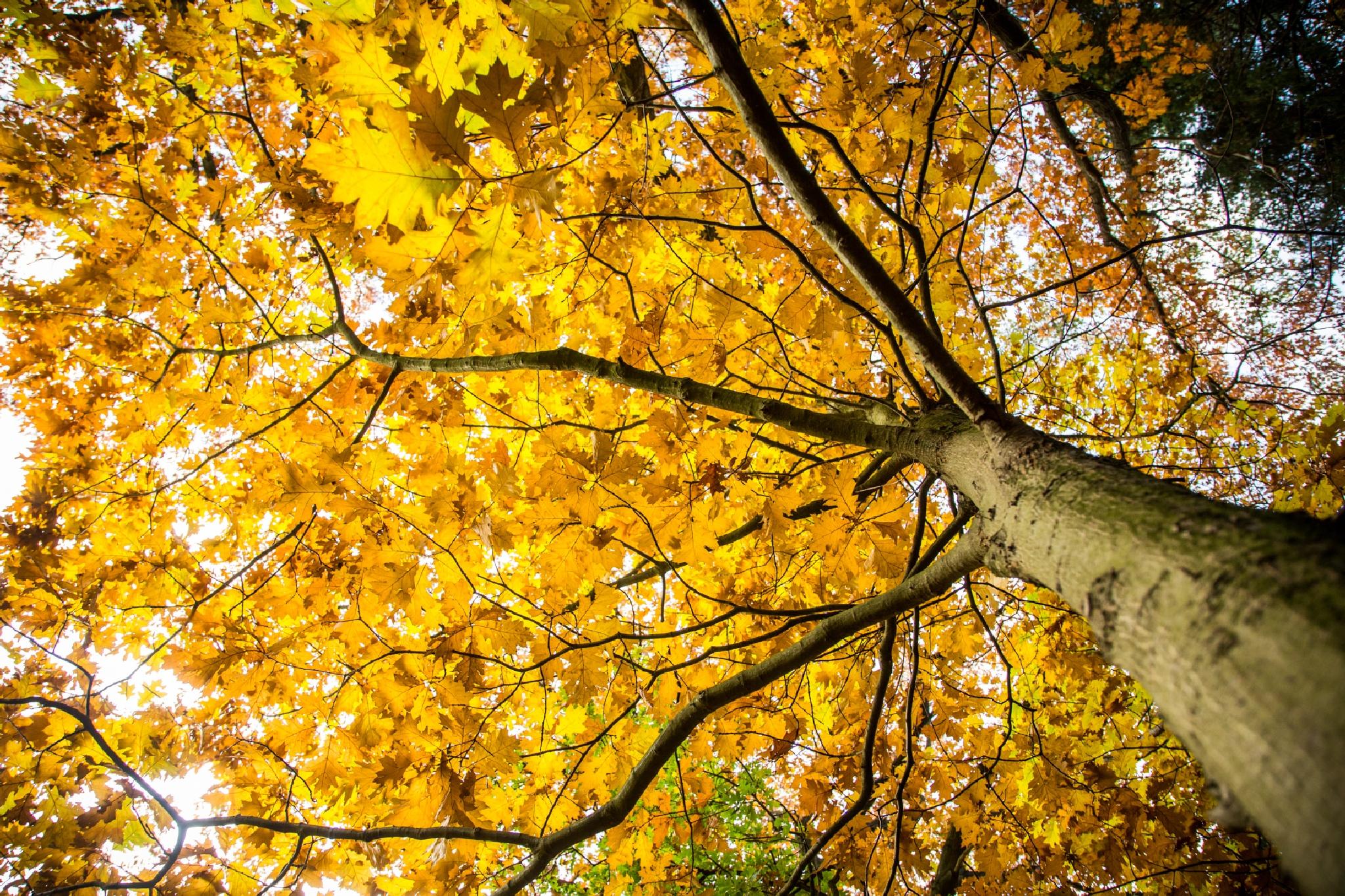 Autumn Leaves by Patrick de Vleeschauwer.