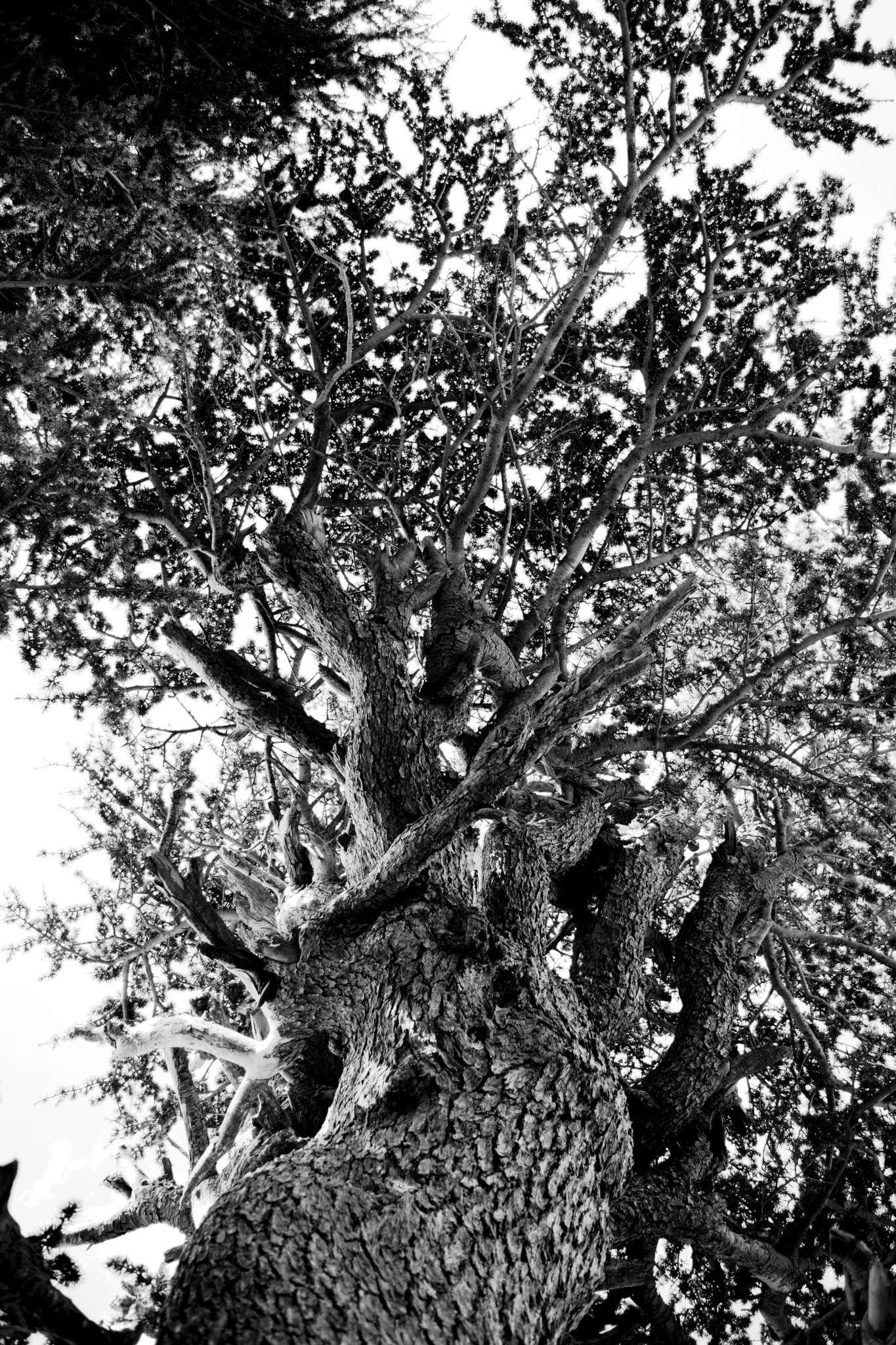 tree by lokmane.yellou