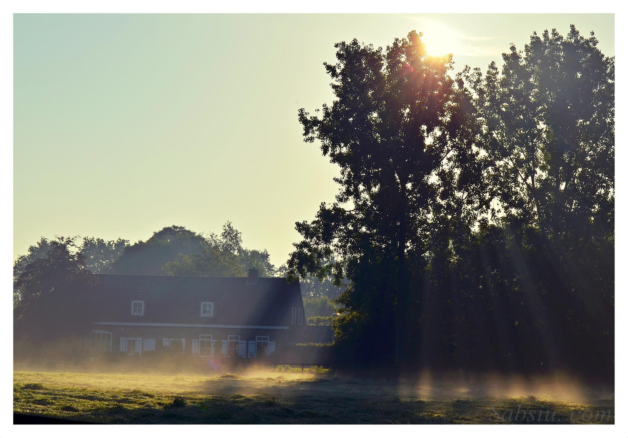 Morning ... by sabina.braja