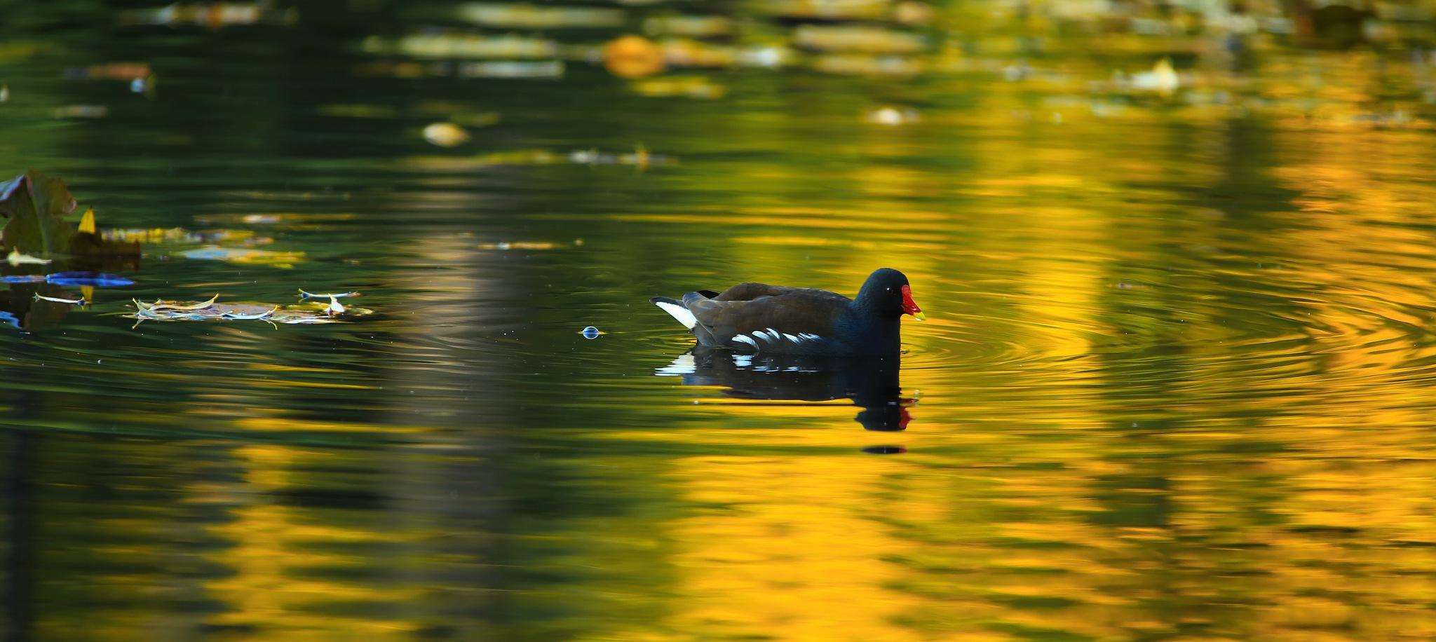 Bird by abi.doroud