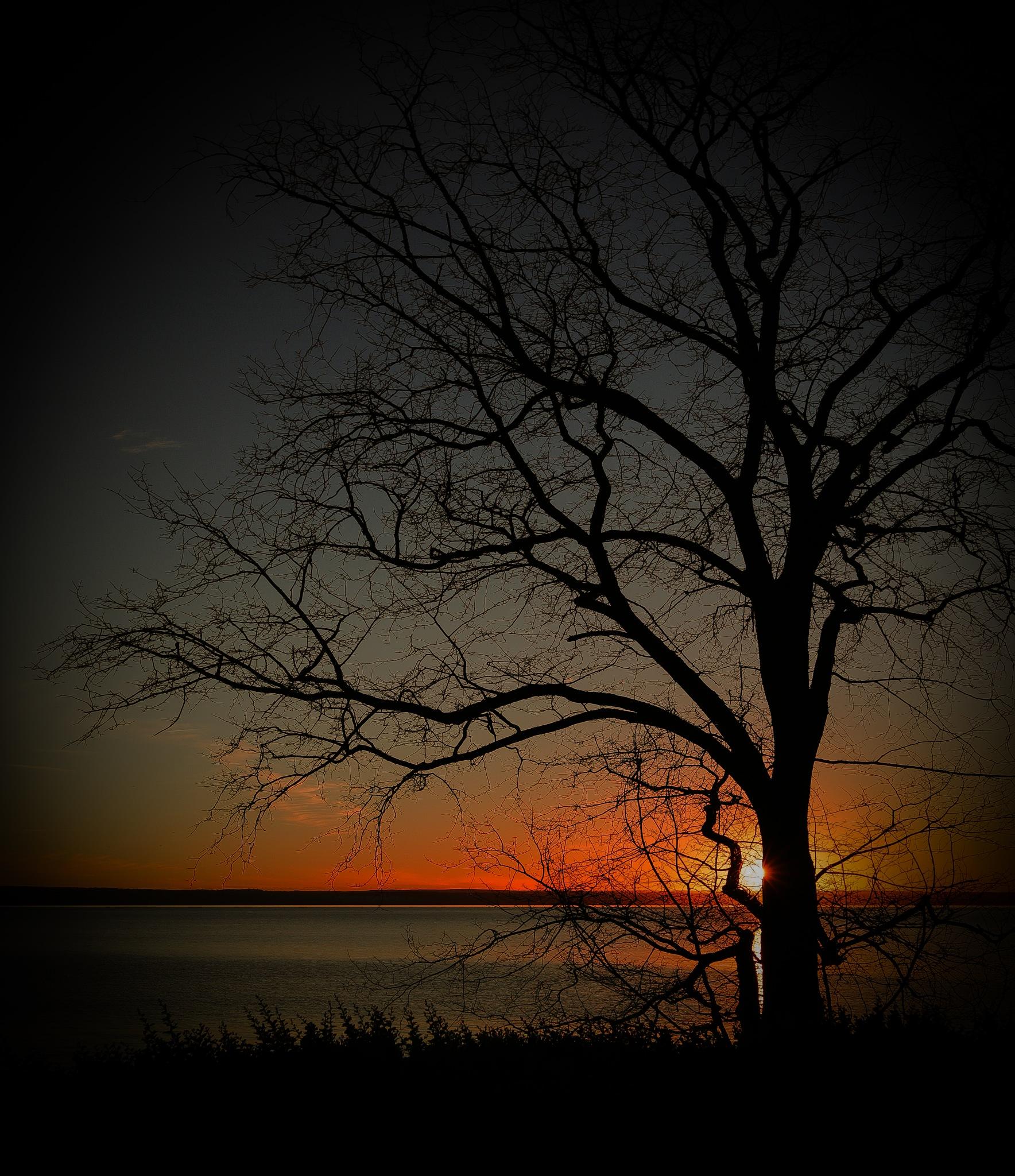 Tree & Sunset by abi.doroud