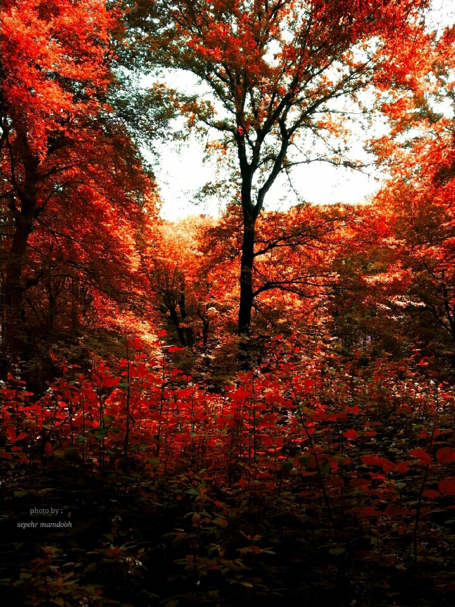 jangel in fall by sepehr.mamdooh
