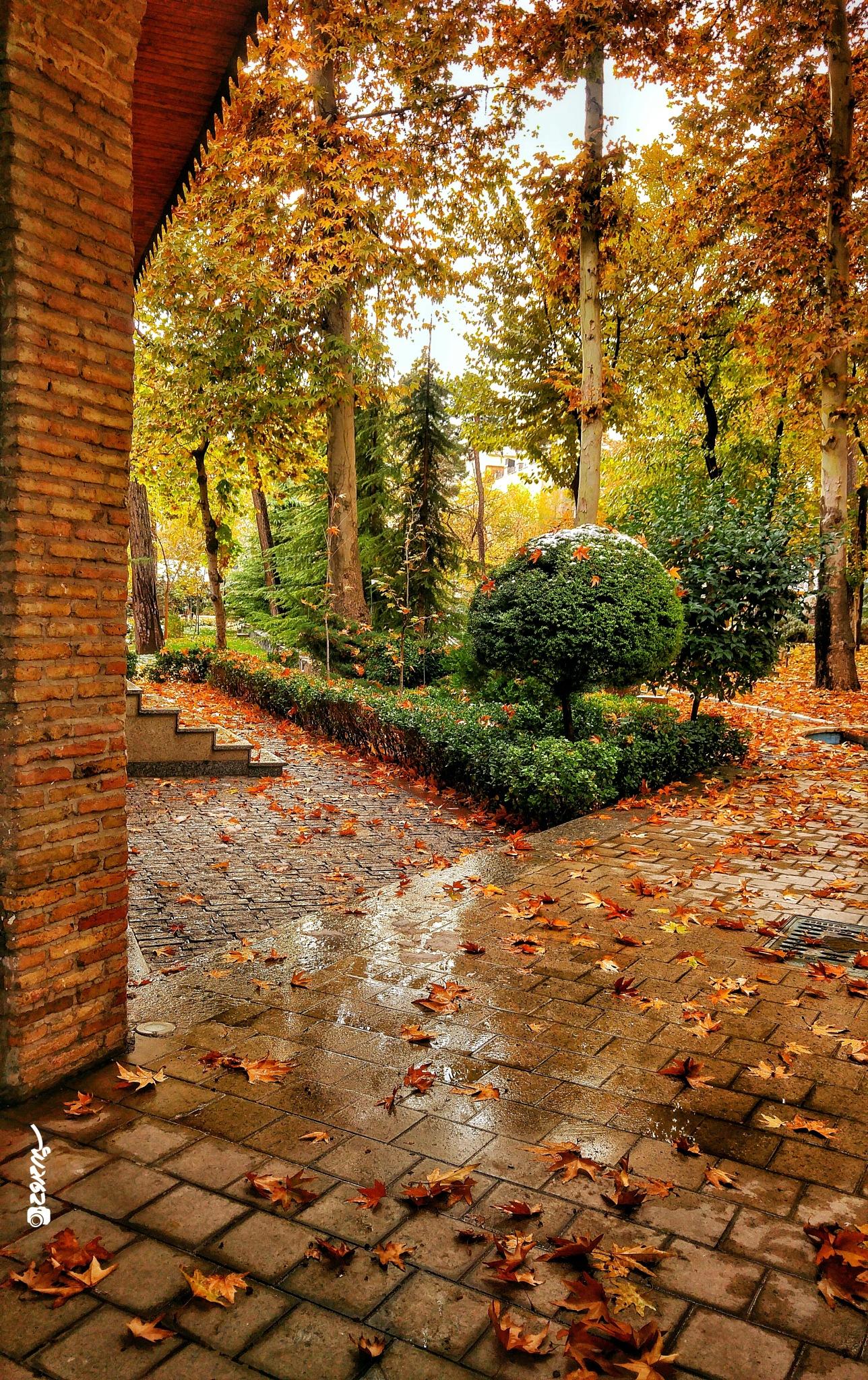 Autumn by sepehr.mamdooh
